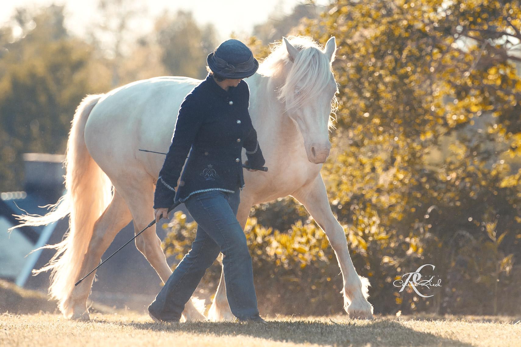 Rebecca Dahlgren - Horse Vision