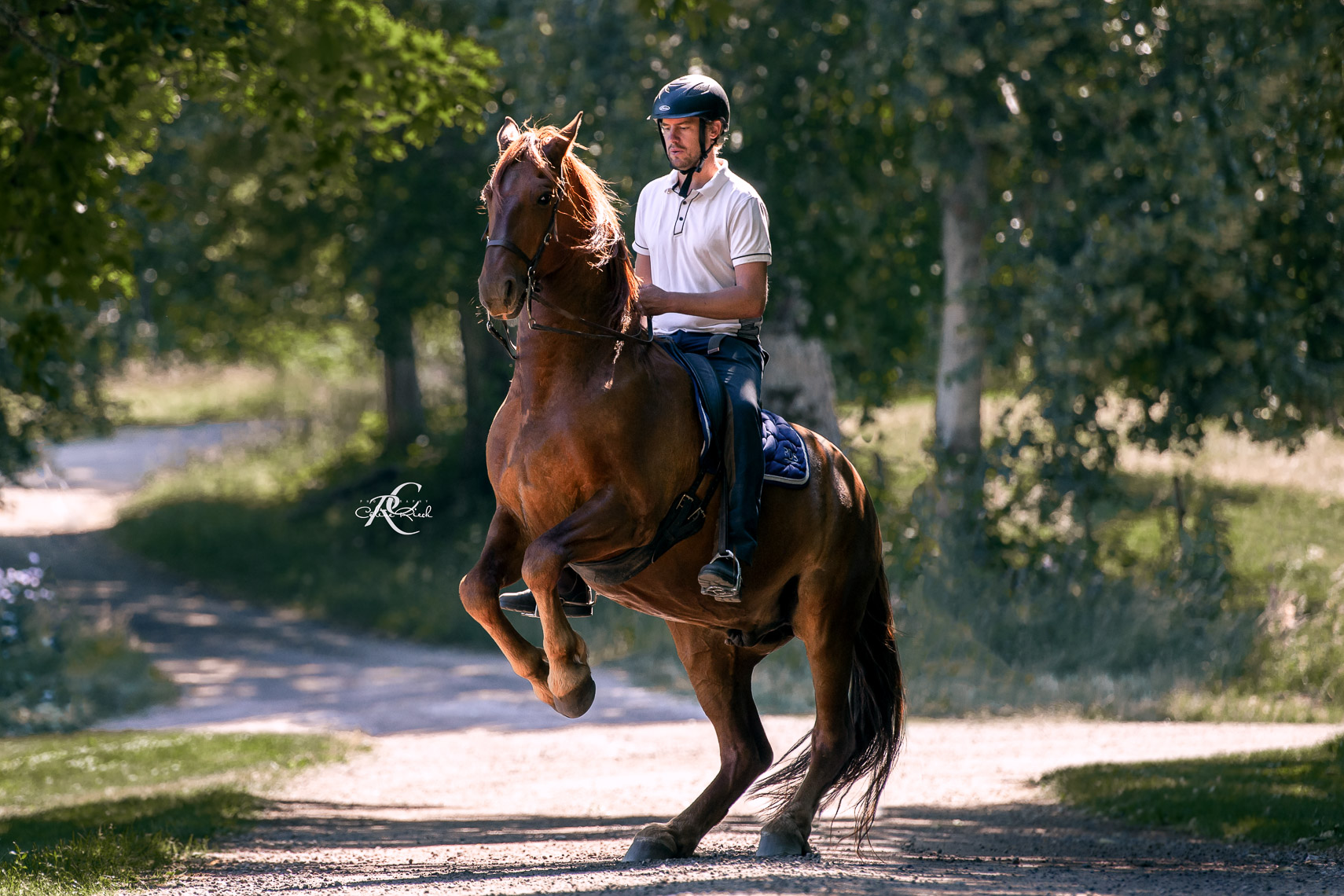 Christofer Dahlgren - Horse Vision