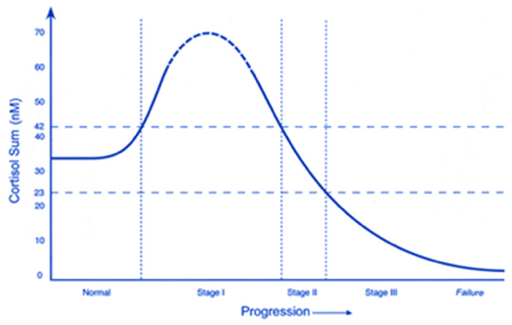 Graph of phases of cortisol production in long standing stress, with the outcome adrenal deficiency and chronic fatigue.