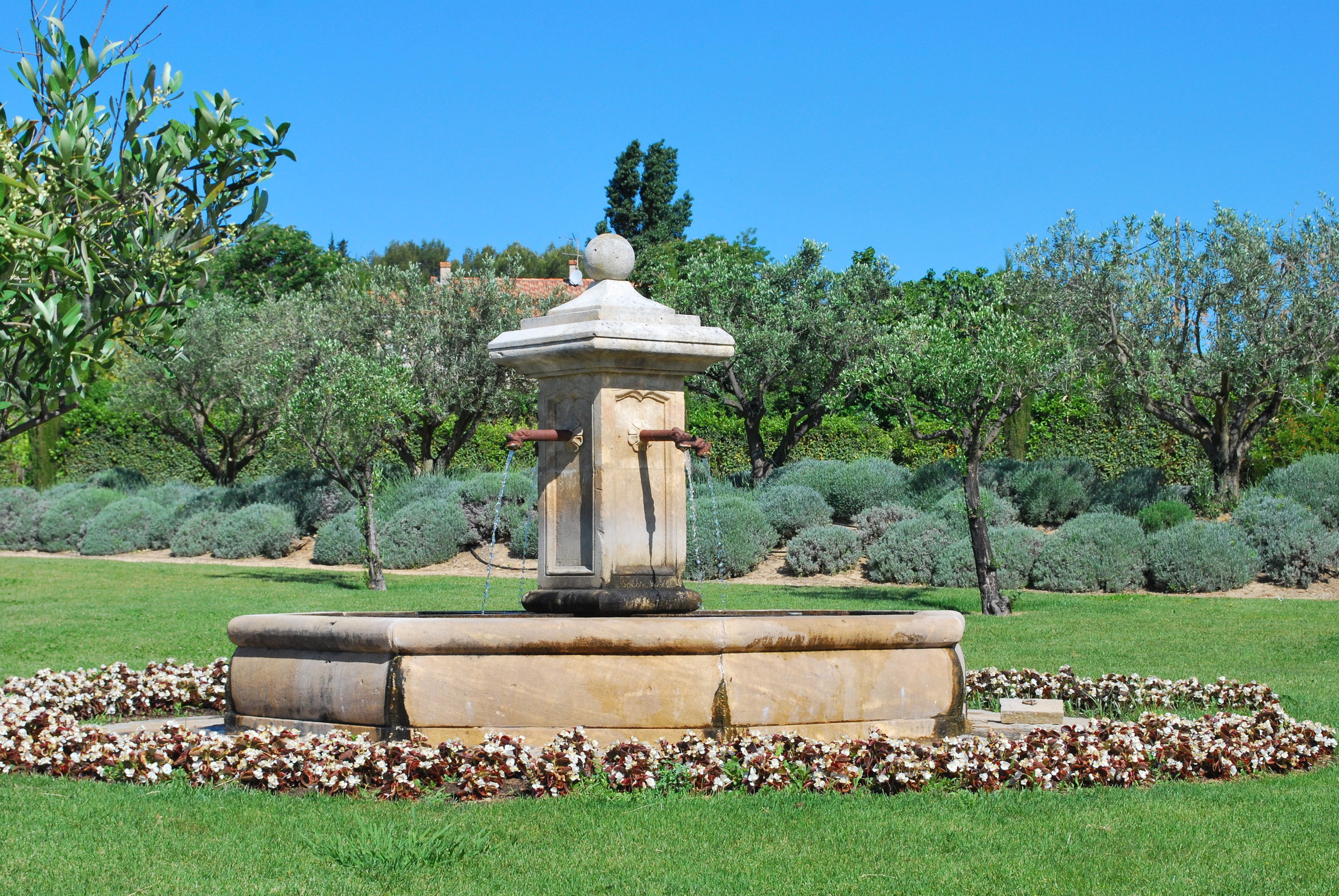 Provence Fountain, Olive Trees and Lavender