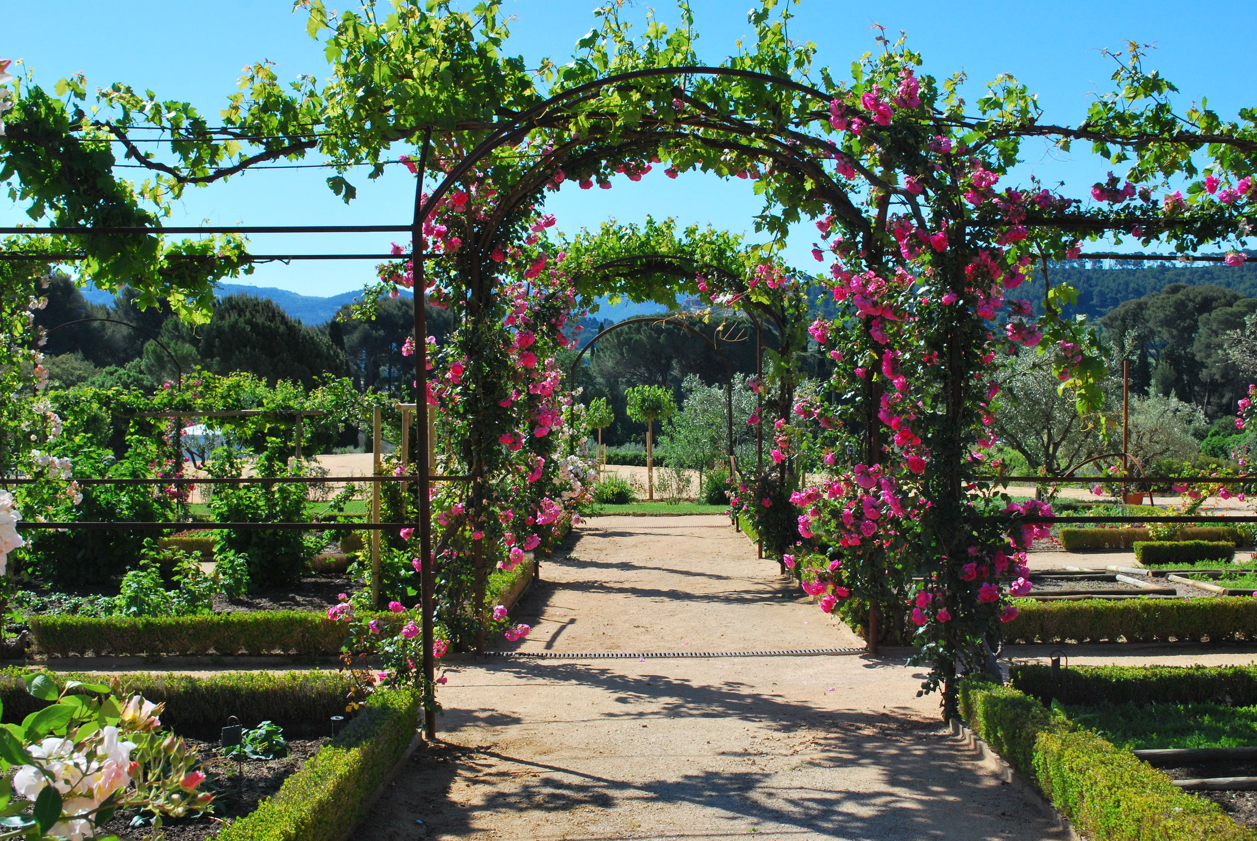 Arches of Roses in His Potager