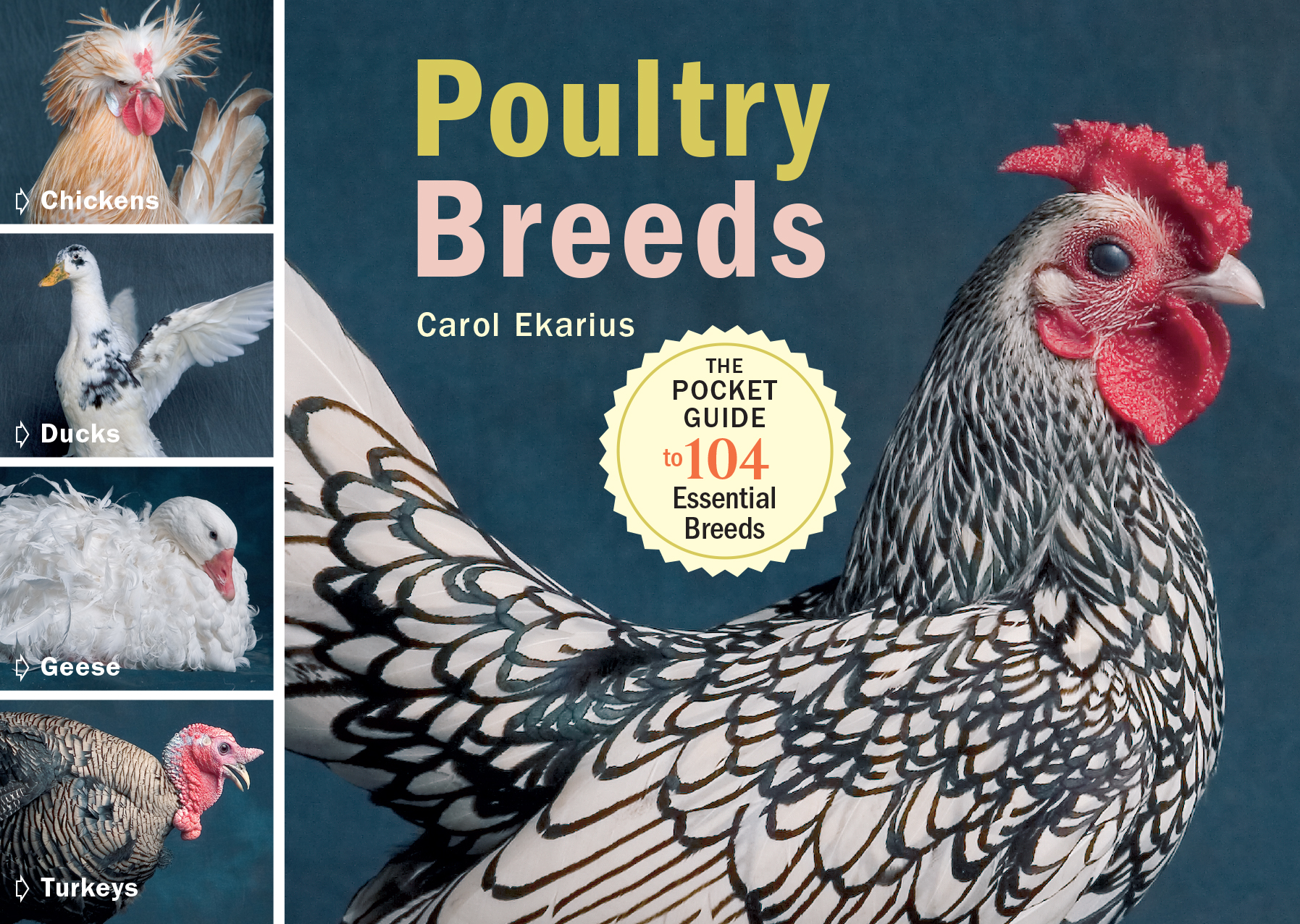 """Photography by © Adam Mastoon, from   Poultry Breeds  , © by Carol Ekarius, used with permission from Storey Publishing."""