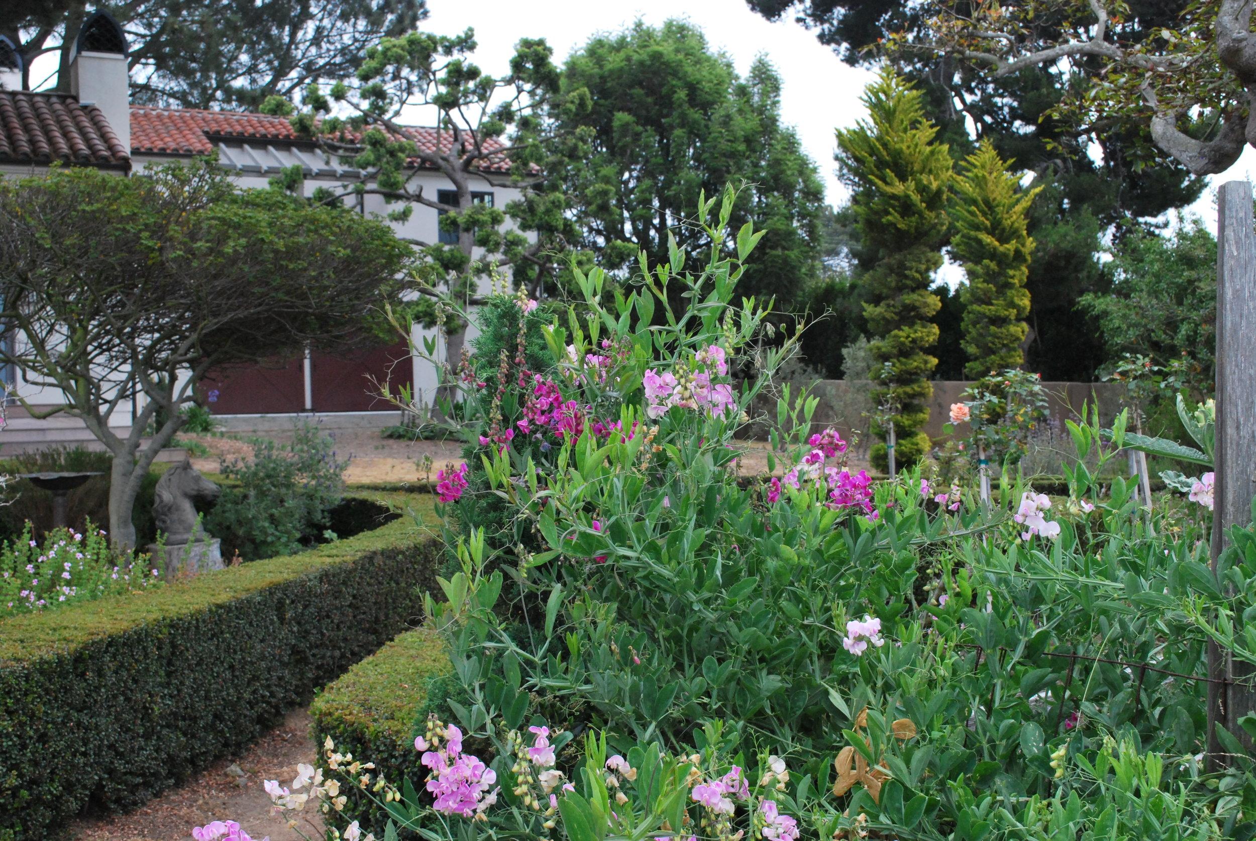 boxwood garden2.jpg