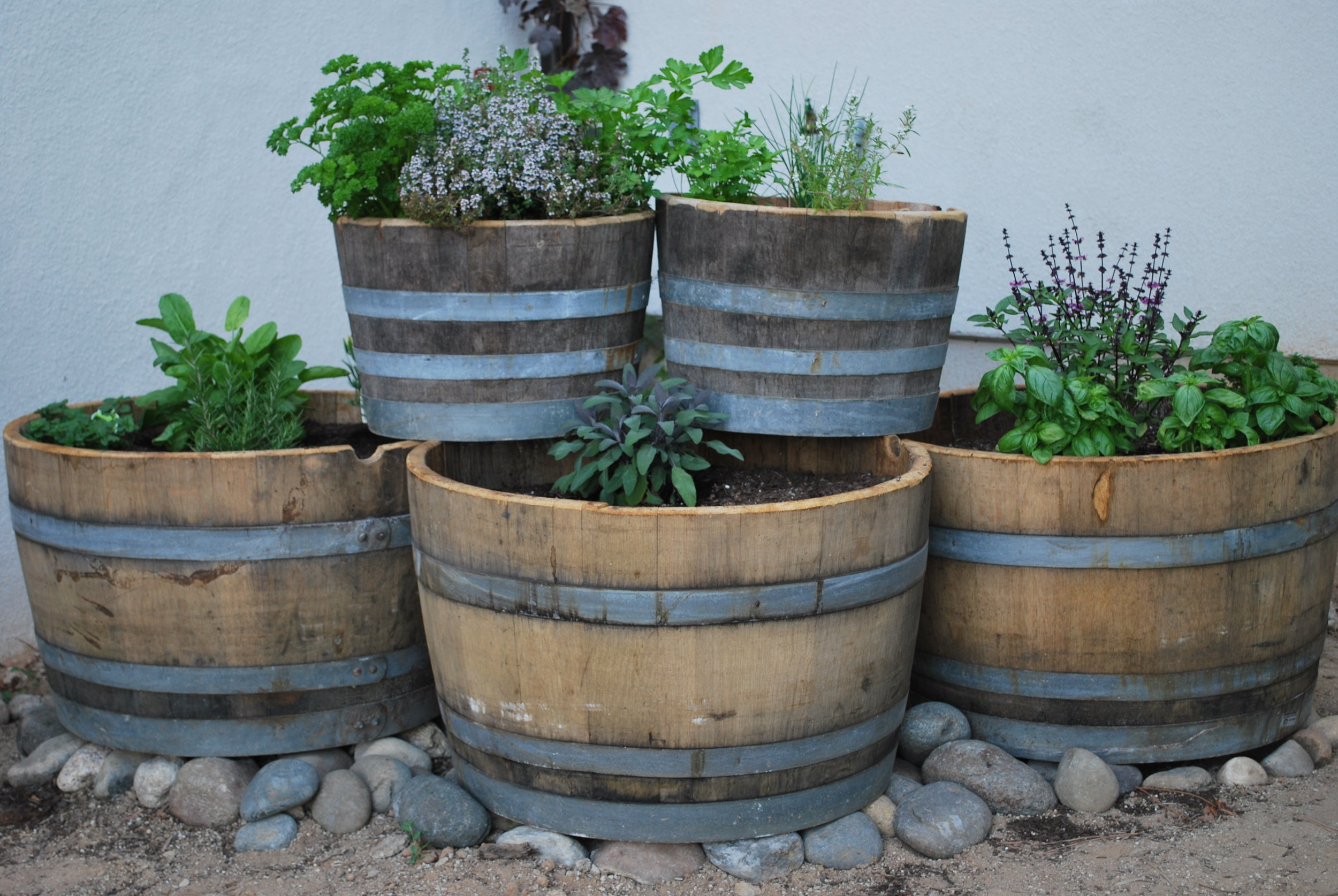 culinary herbs in barrels.jpg