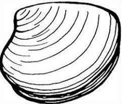 clam photo.jpg