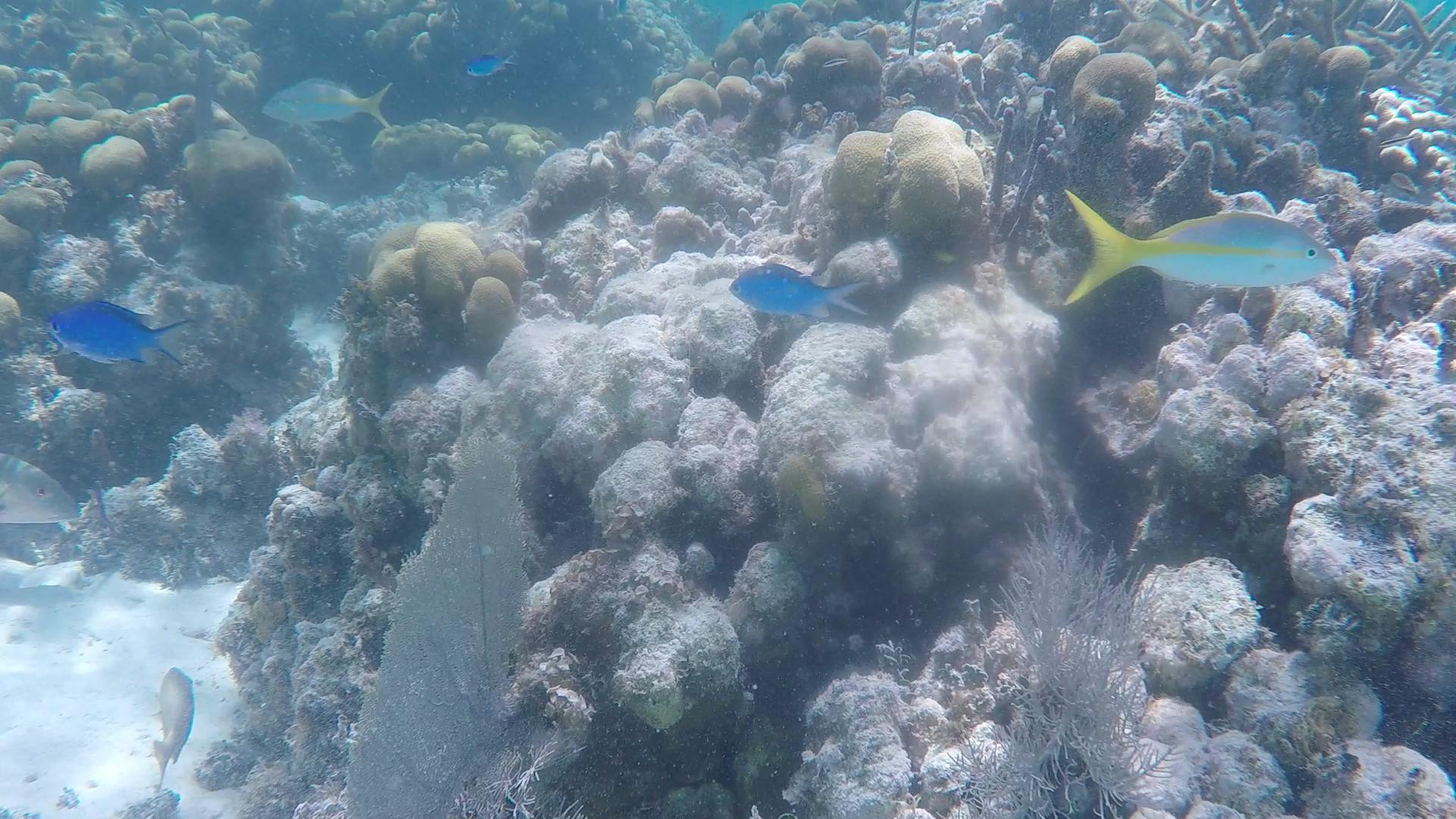 colorful fish caye caulker snorkeling.png