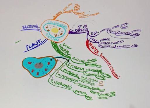 Darius Mind map studio Cell structure.JPG