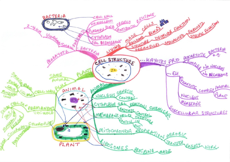 Cell structure Mind map.jpg