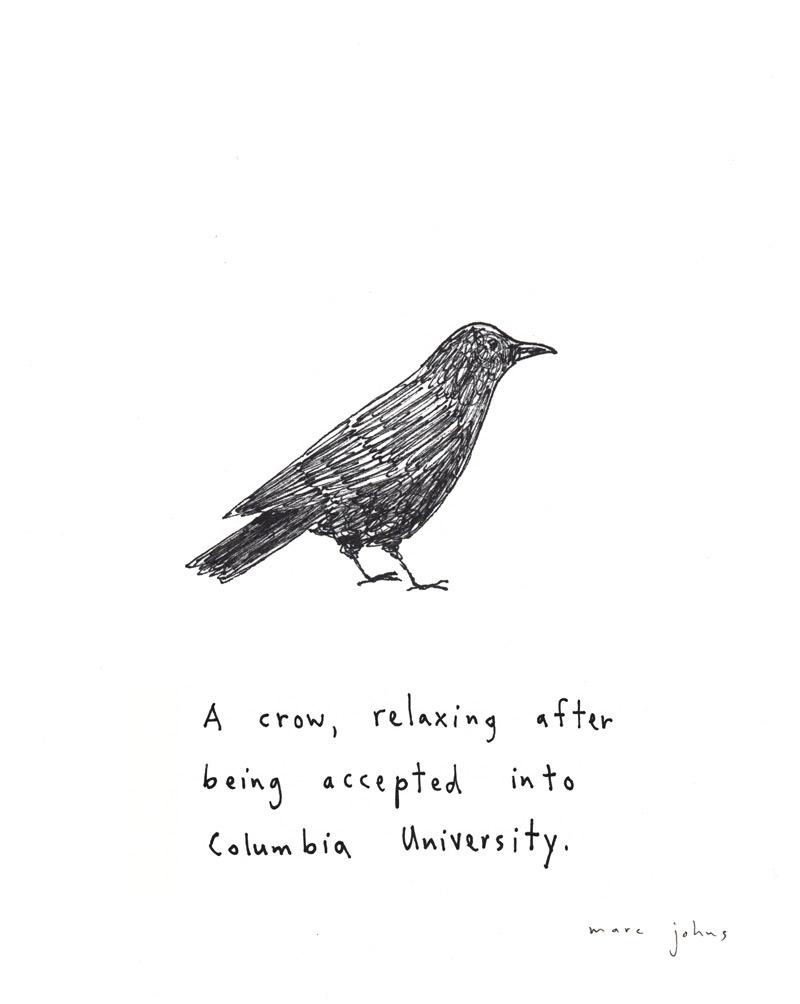 crow-custom-2.jpg