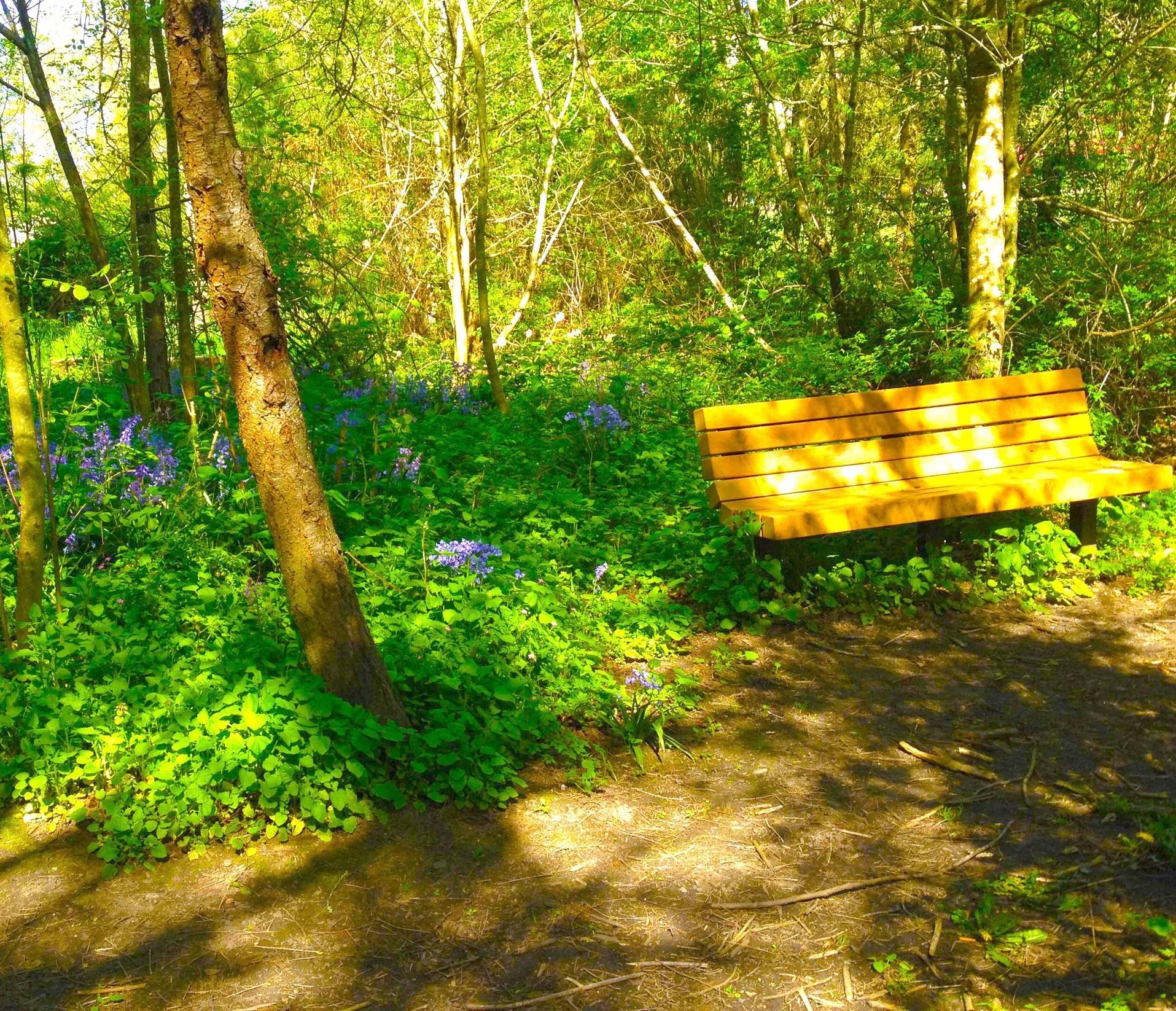 Bench-in-Mercerdale-woodlands-4-16-16_optimized.jpg