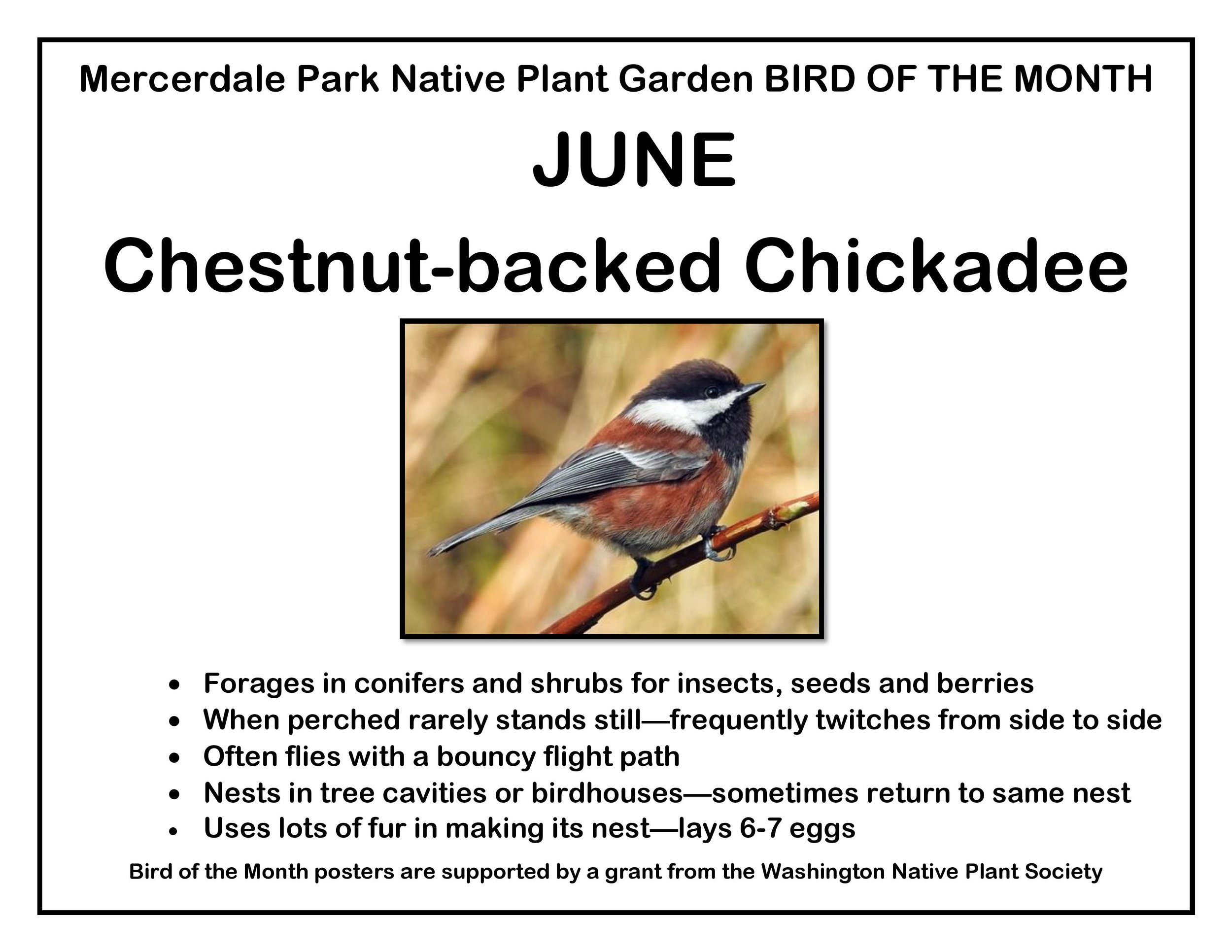 p BIRD OF THE MONTH 6 June Chestnut backed FINAL-page-001.jpg