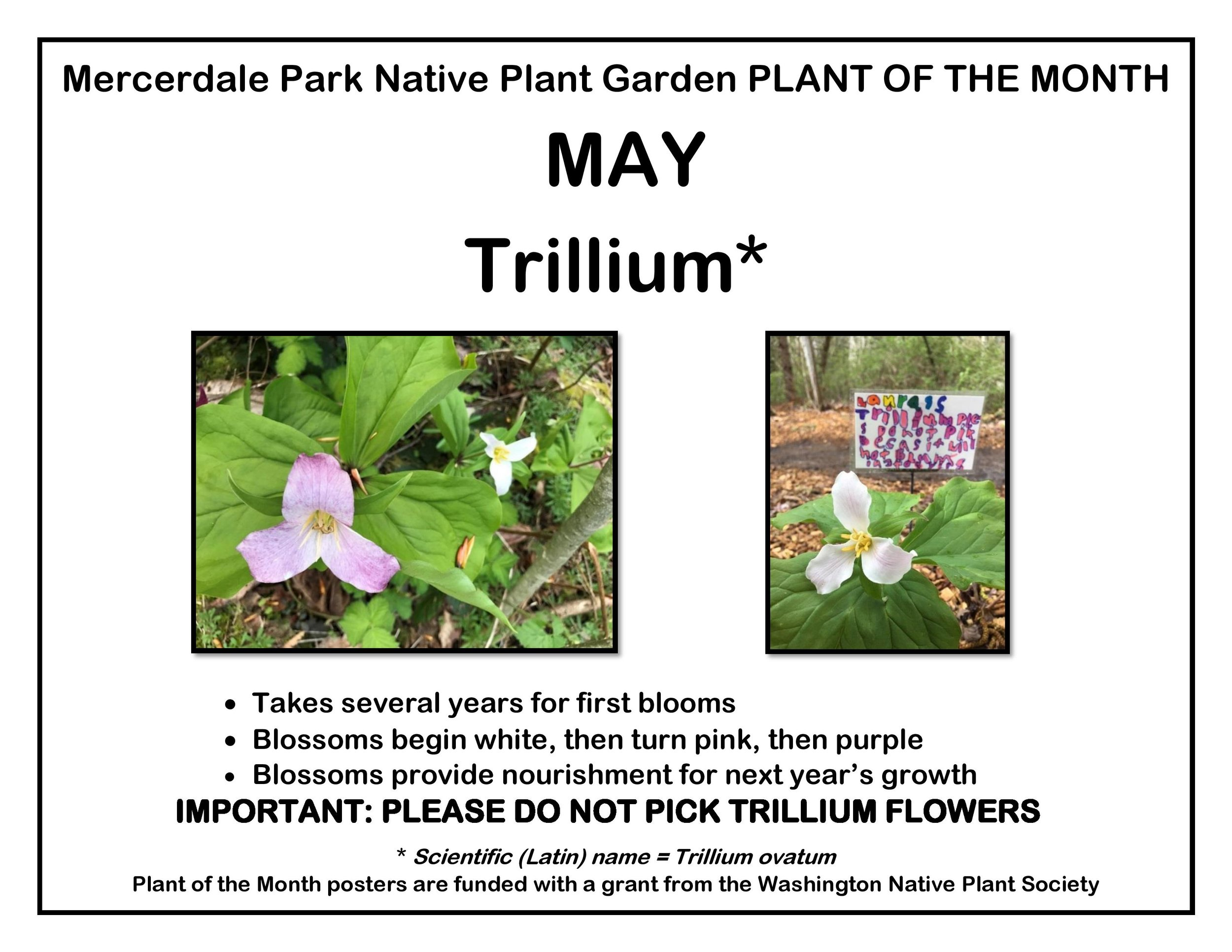 p PLANT OF THE MONTH 5 May trillium website-page-001.jpg