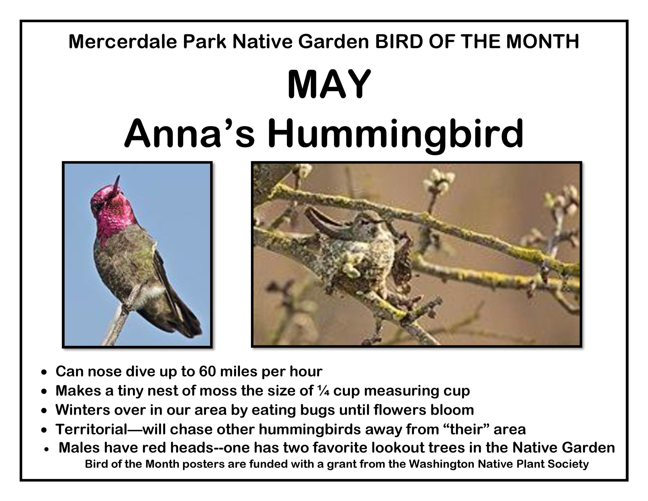 p BIRD OF THE MONTH 5 May Anna s 4 website-page-001.jpg