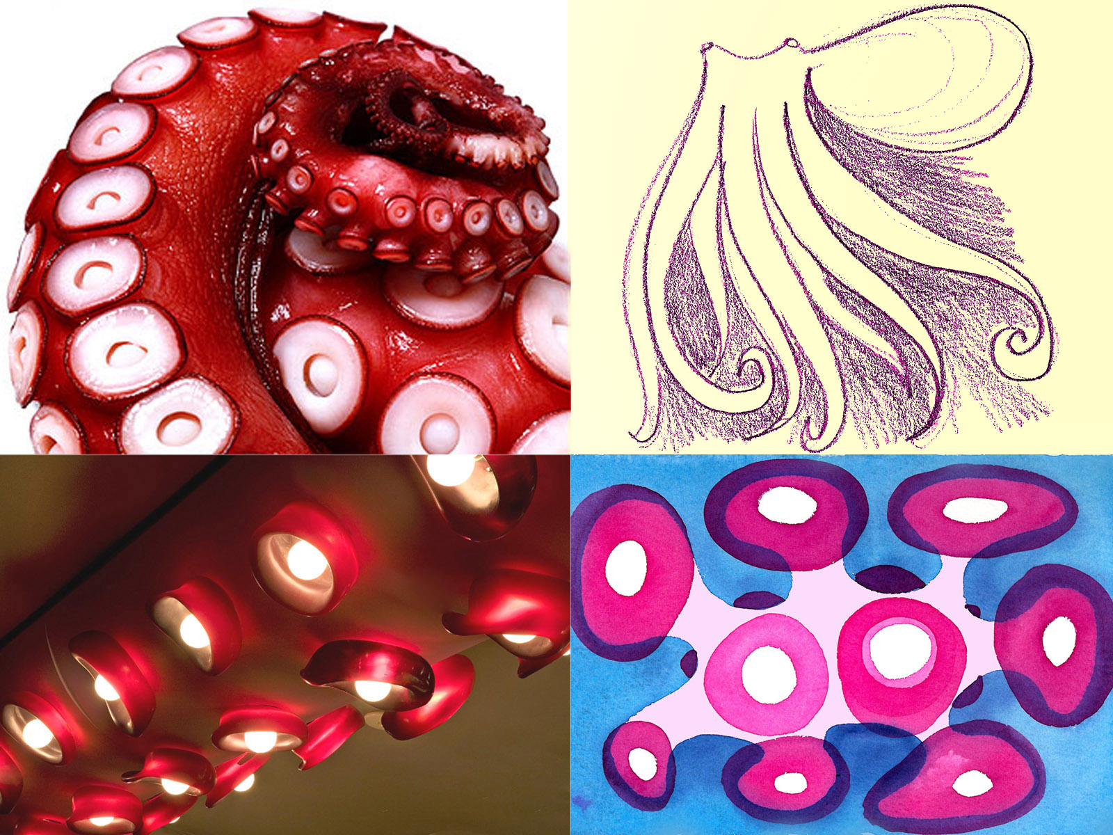 Octopus Chandelier and Studies