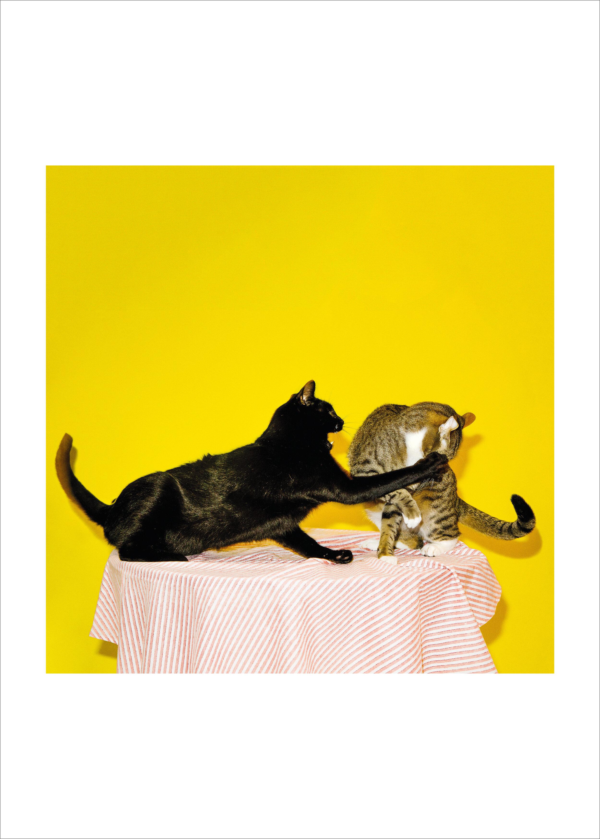 cats fighting.jpg