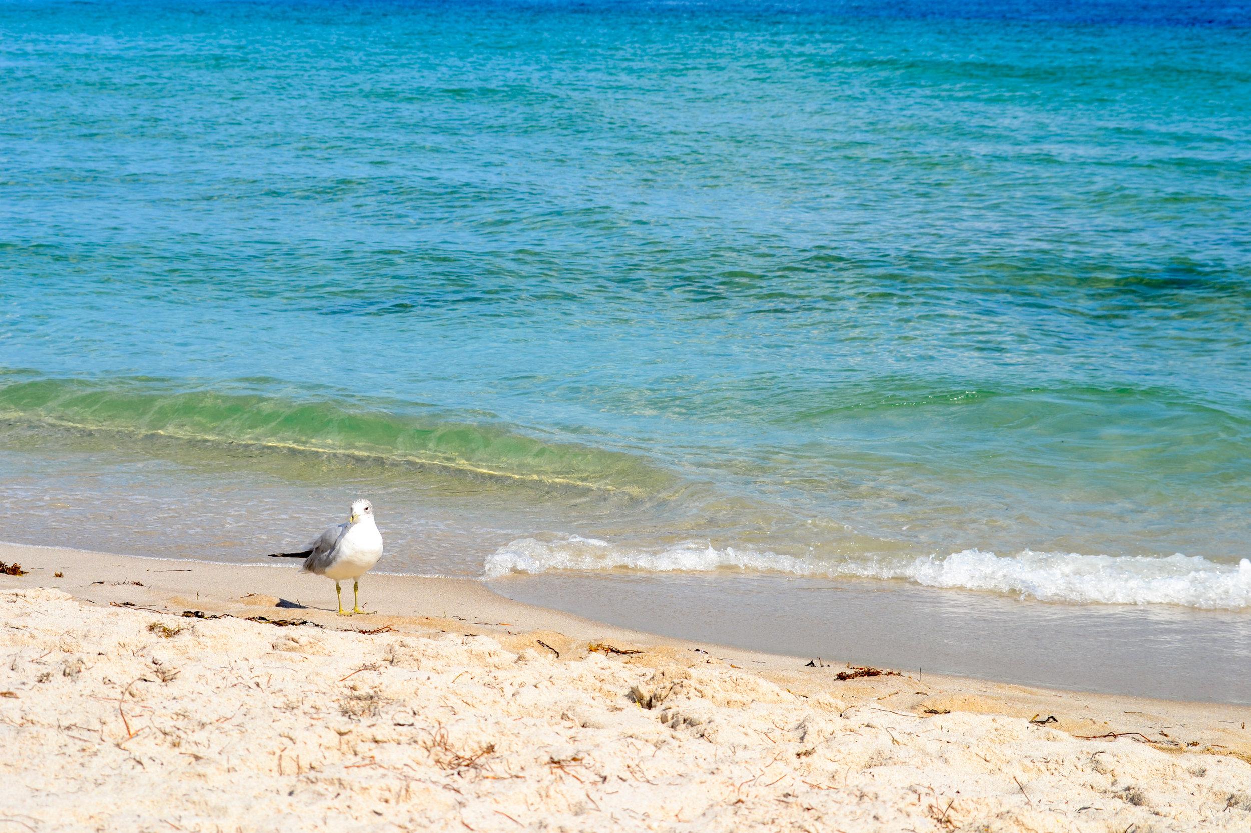 olapi-creative-branding-retreat-florida-seagull