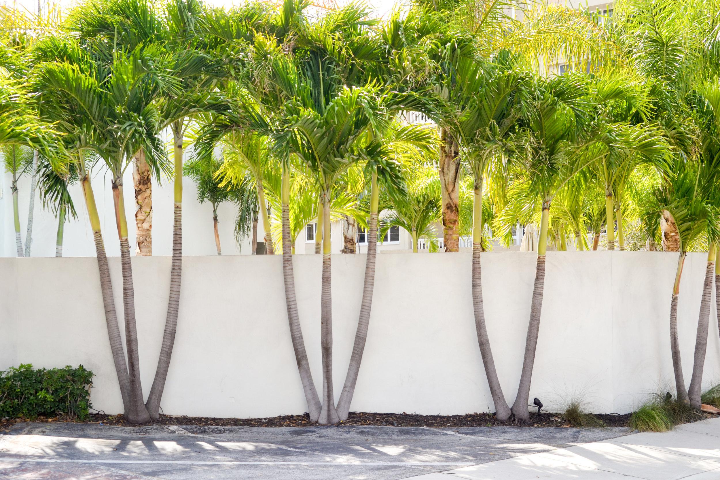 olapi-creative-branding-retreat-palmtrees