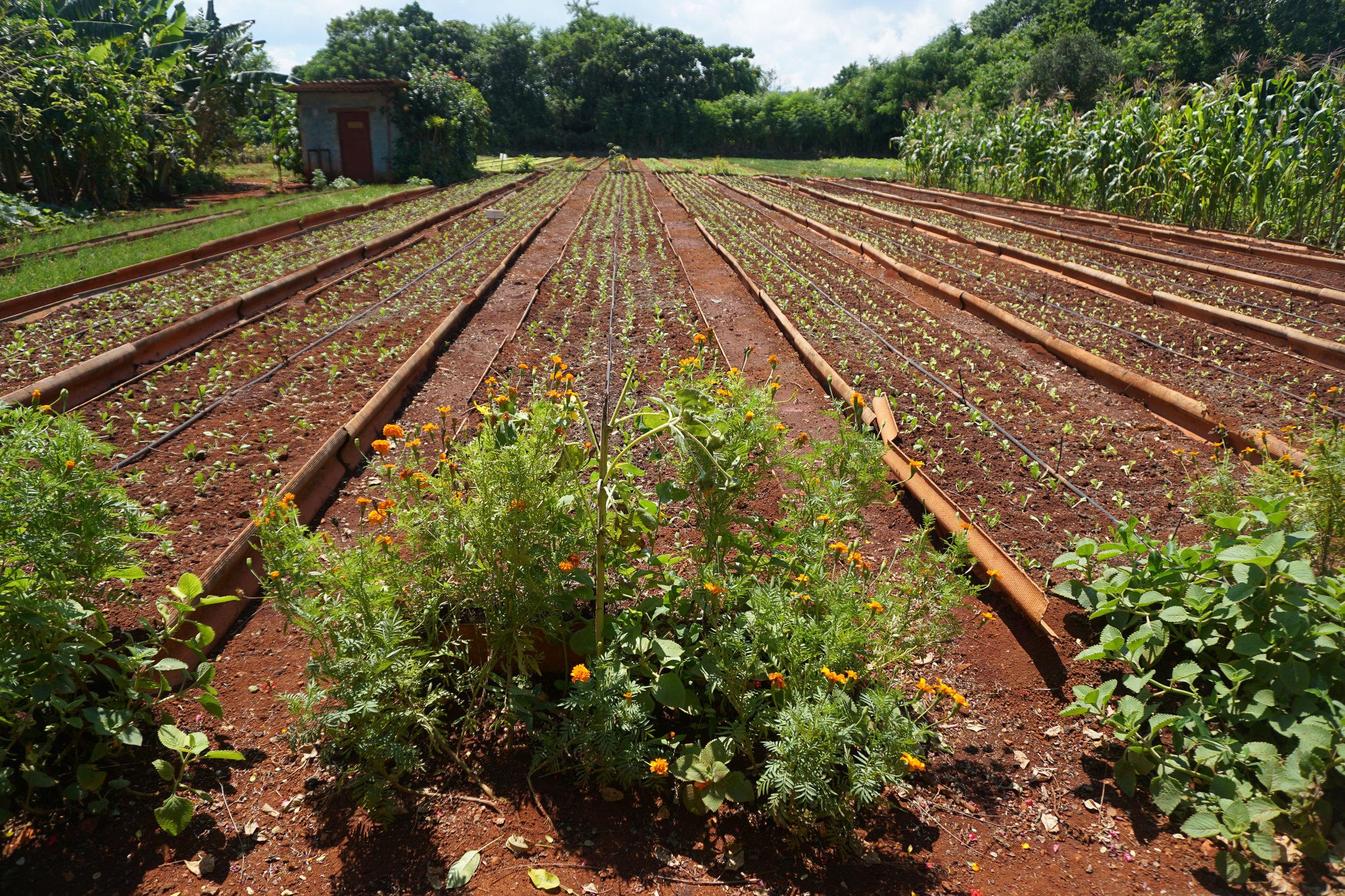 olapi-creative-cuba-trip-organic-farm