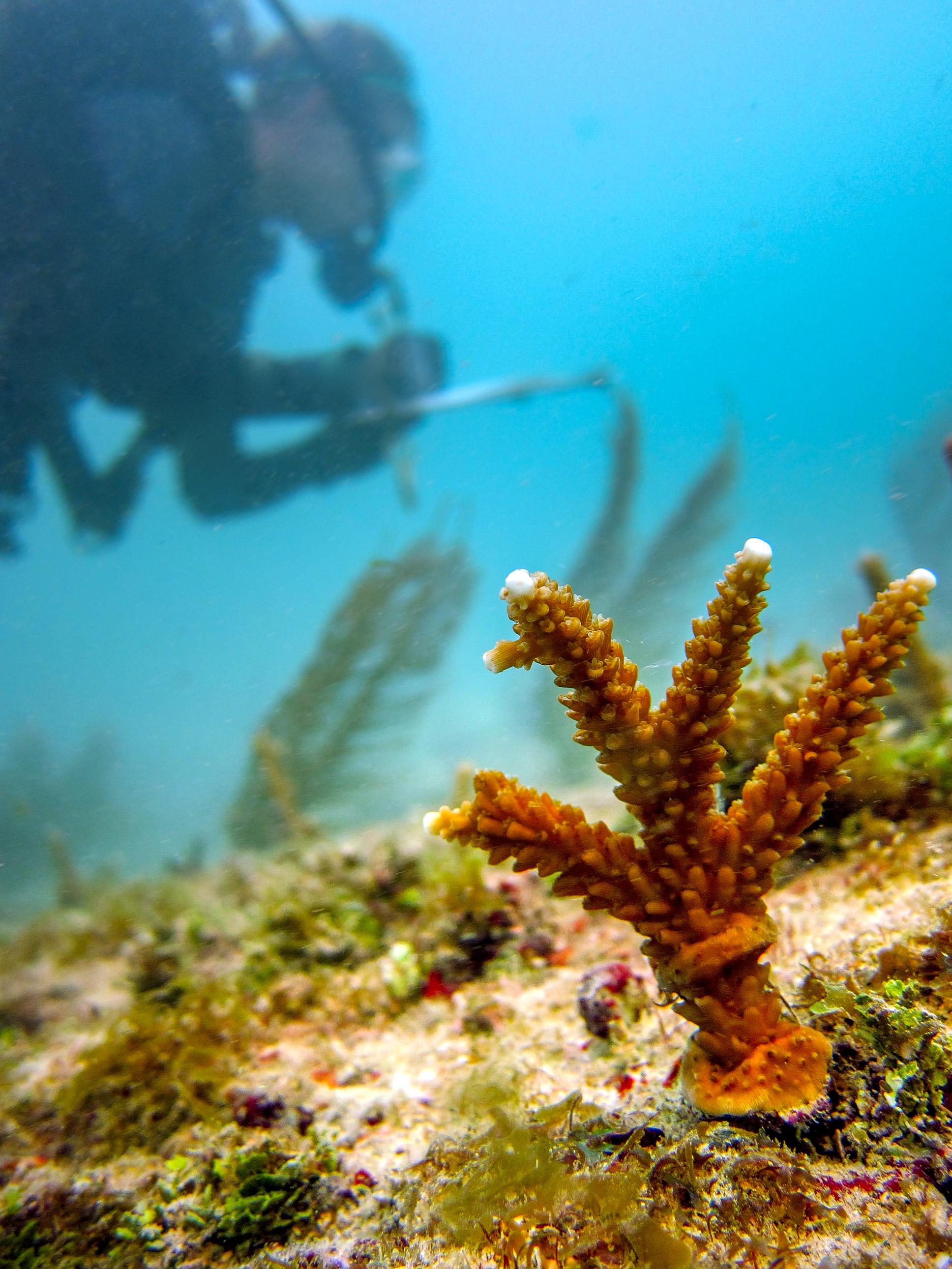 olapi-creative-blue-business-spotlight-coral-restoration