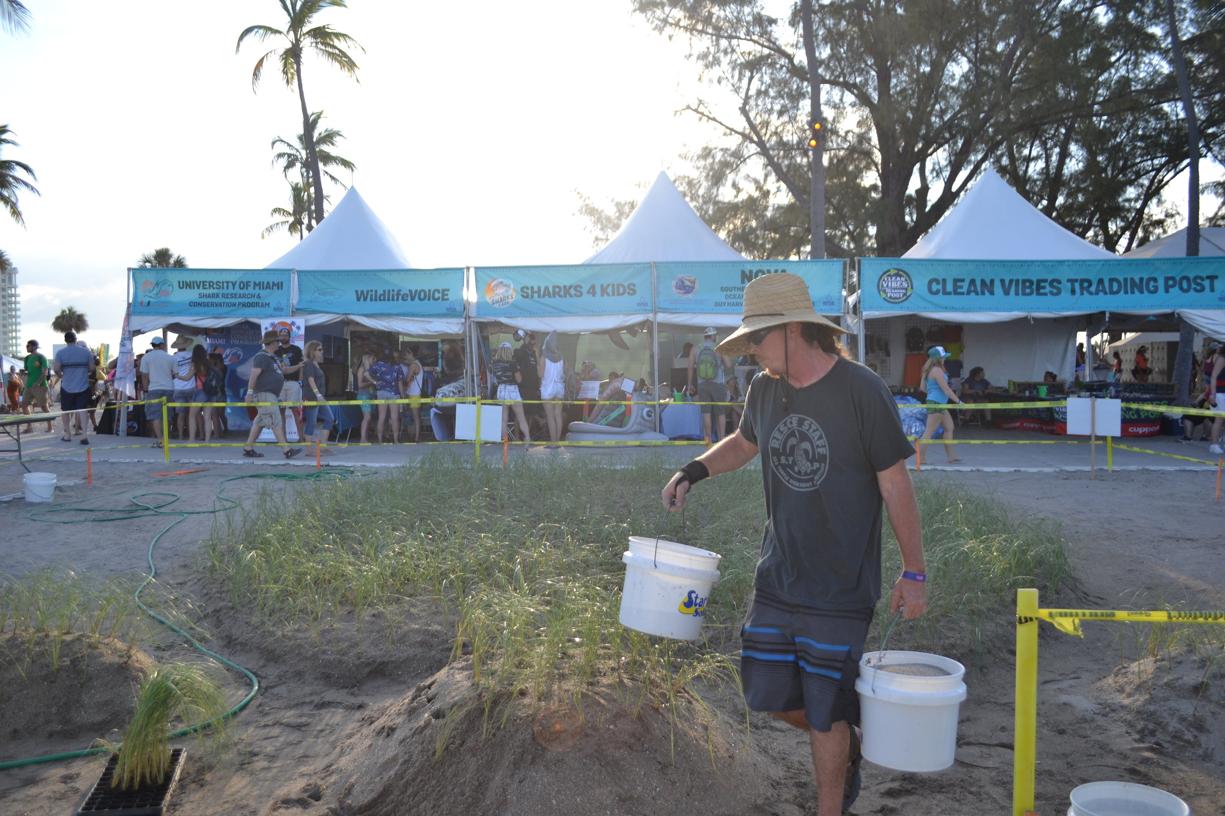 Richard WhiteCloud tended to hundreds of sea oat plugs that concert goers helped to plant during TortugaFest 2017. The plants that cover the sea turtle-shaped sand dune Richard sculpted will provide sea turtle habitat and help to prevent beach erosion.