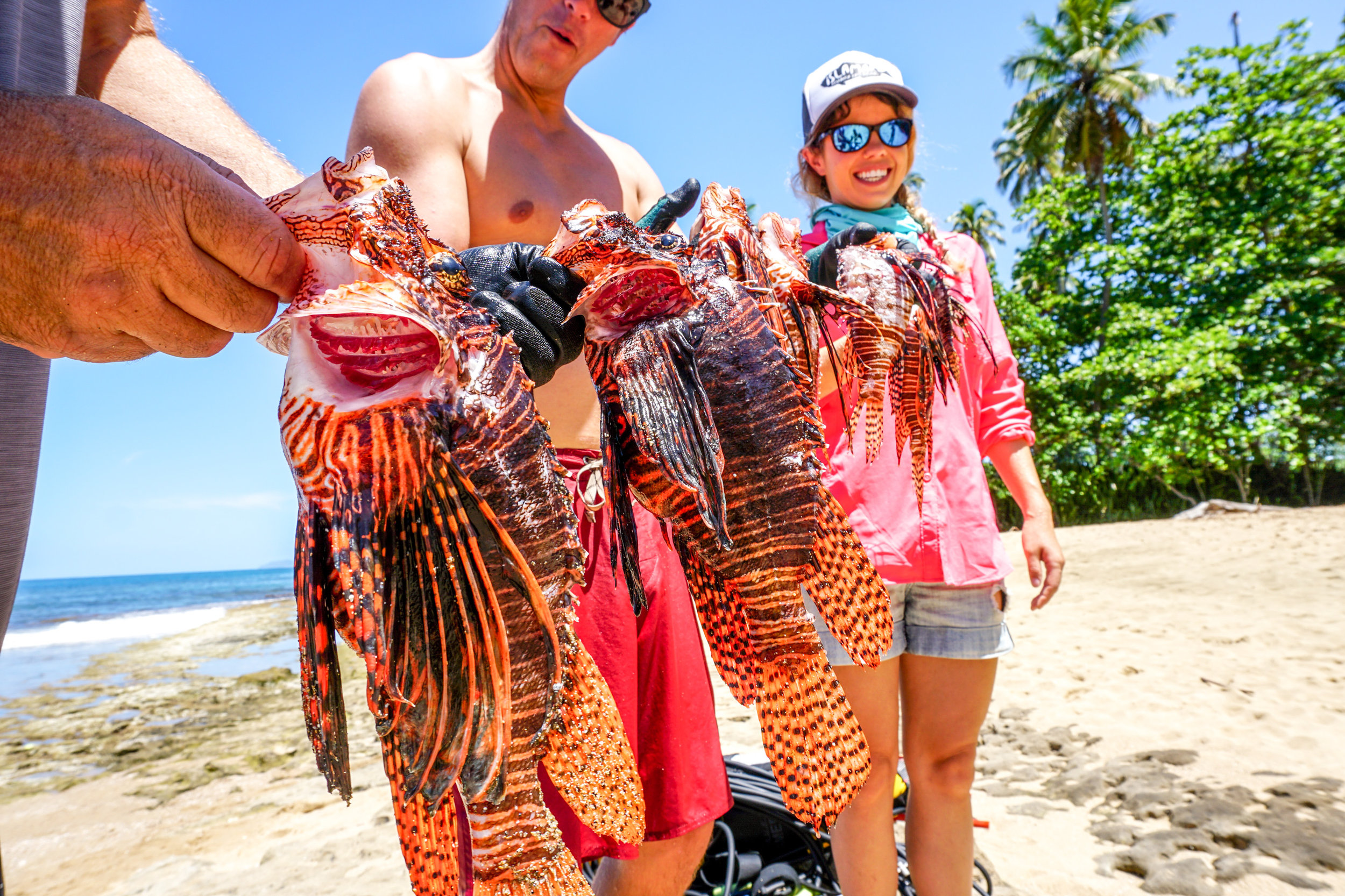 Lionfish of all life stages can be found in the Tres Palmas Marine Reserve.