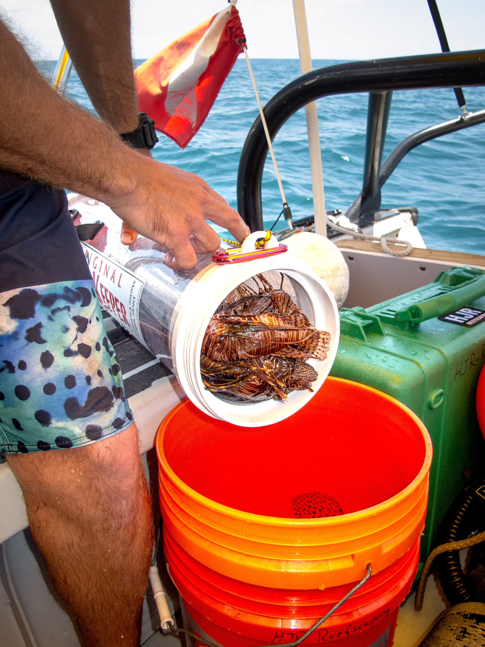 We removed over 20 Lionfish from the reef that day.