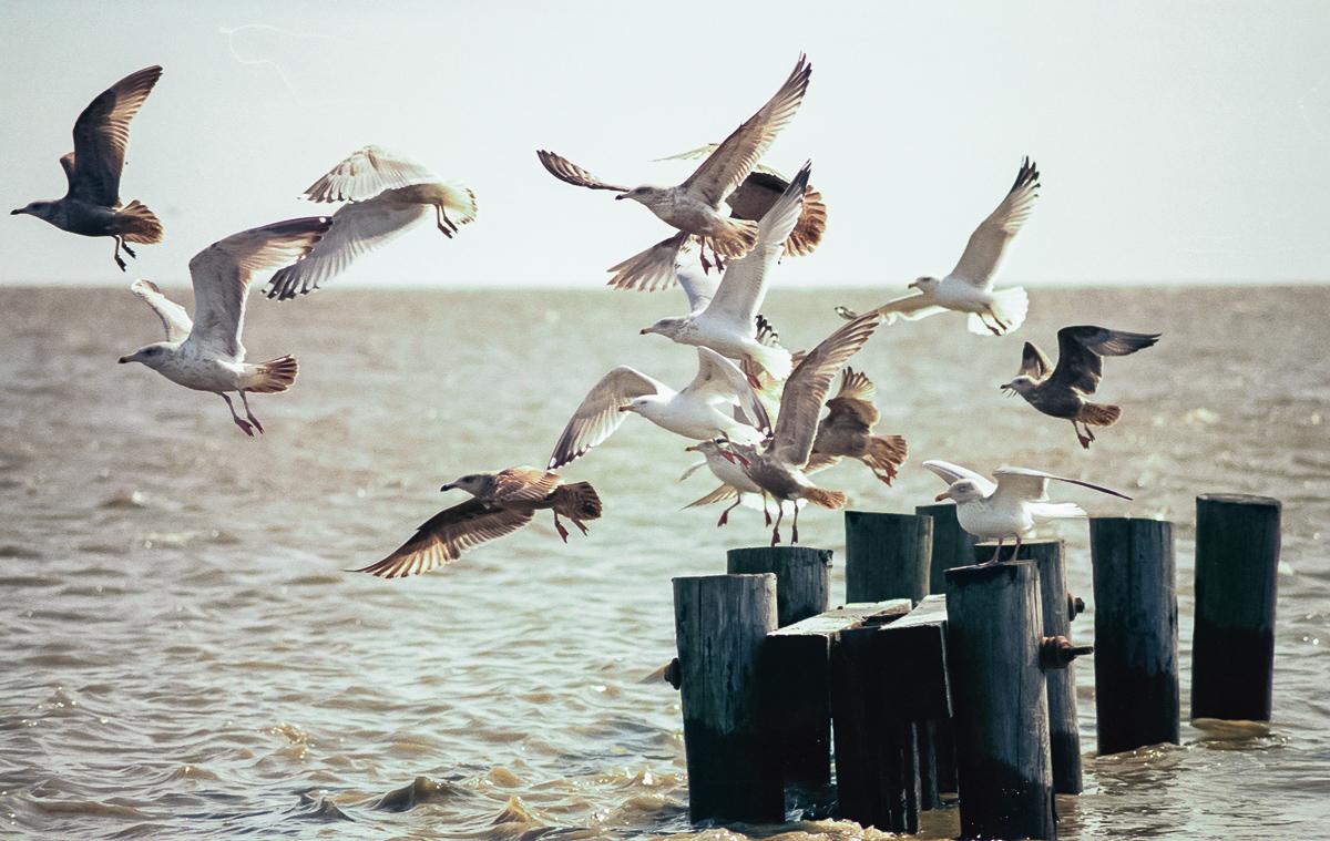 Port Mahon, Delaware