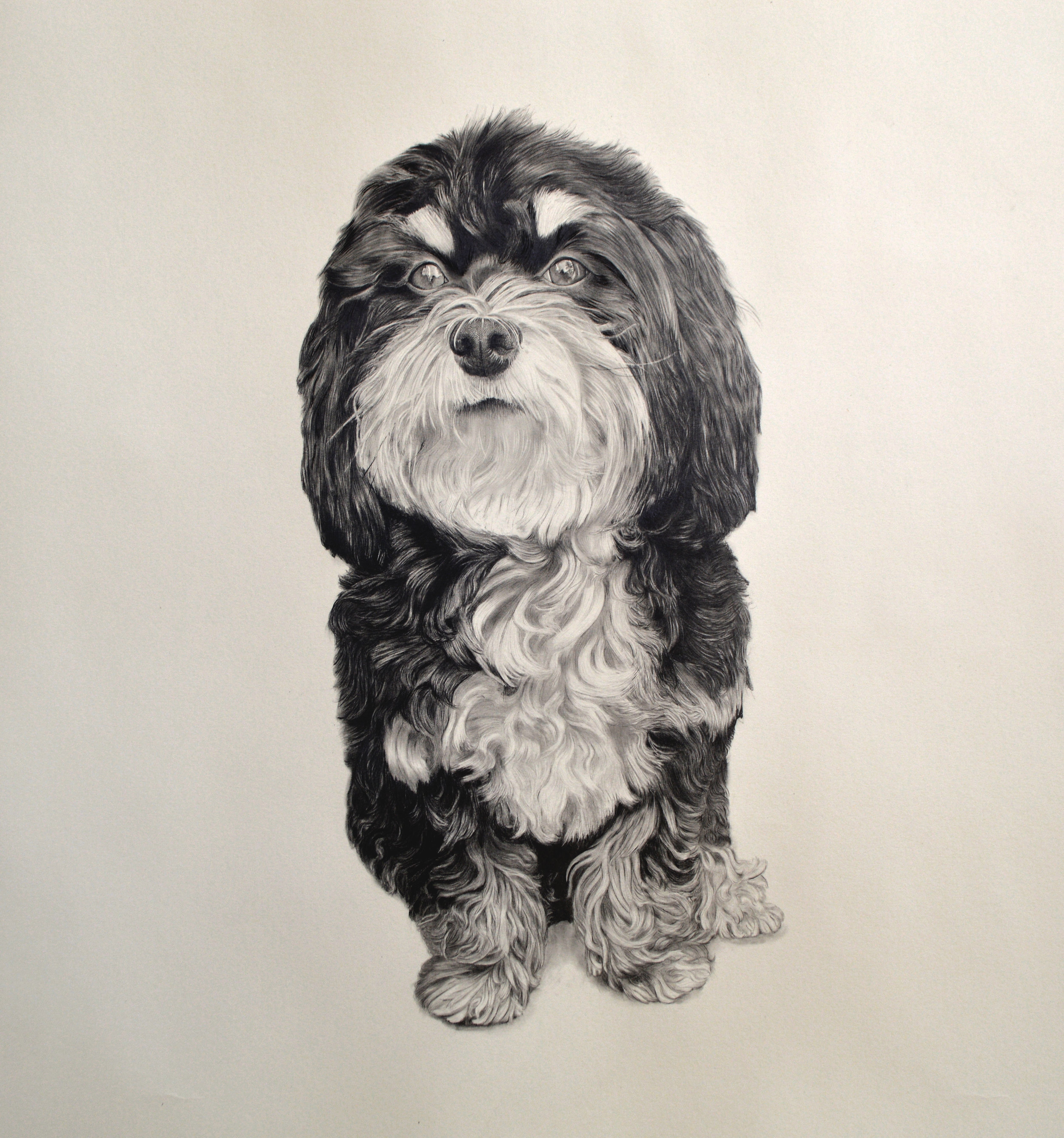 "Remy  Graphite on paper  36"" x 36"" in"