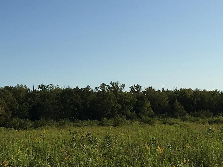 Wooded area on west field LR.jpg