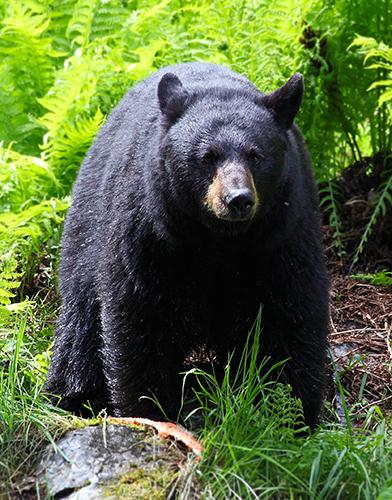 mama bear LR.jpg