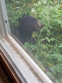 backyard bear 3 LR.jpg
