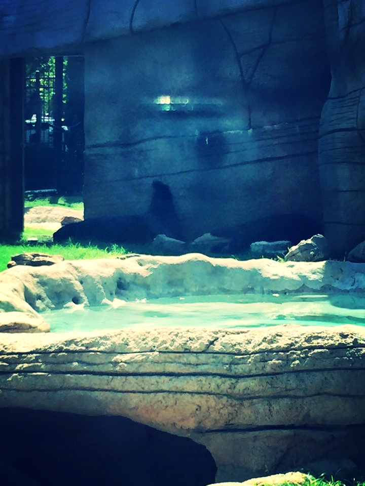 One of the bears has her leg up in an IDGAF attitude. You go, bear.