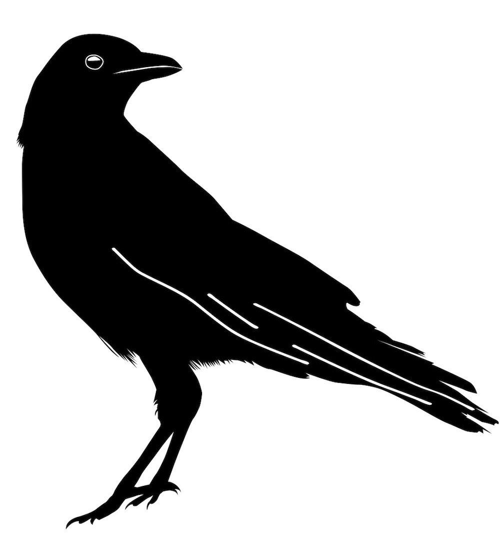 Hasan Reza crow 2.jpg