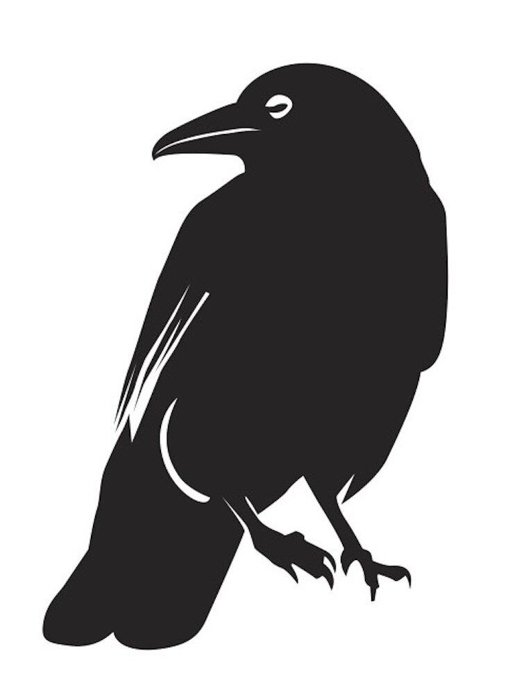 Hasan Reza crow 6.jpg