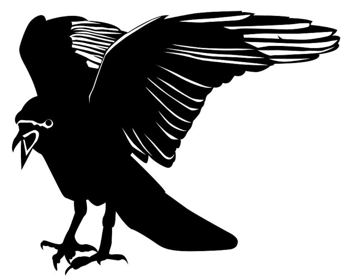 Hasan Reza crow 8.jpg