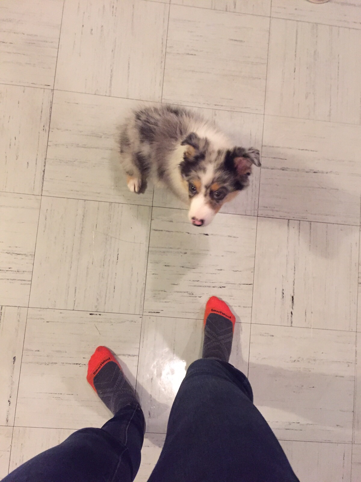 Lylo, our host Imran's cute puppy!