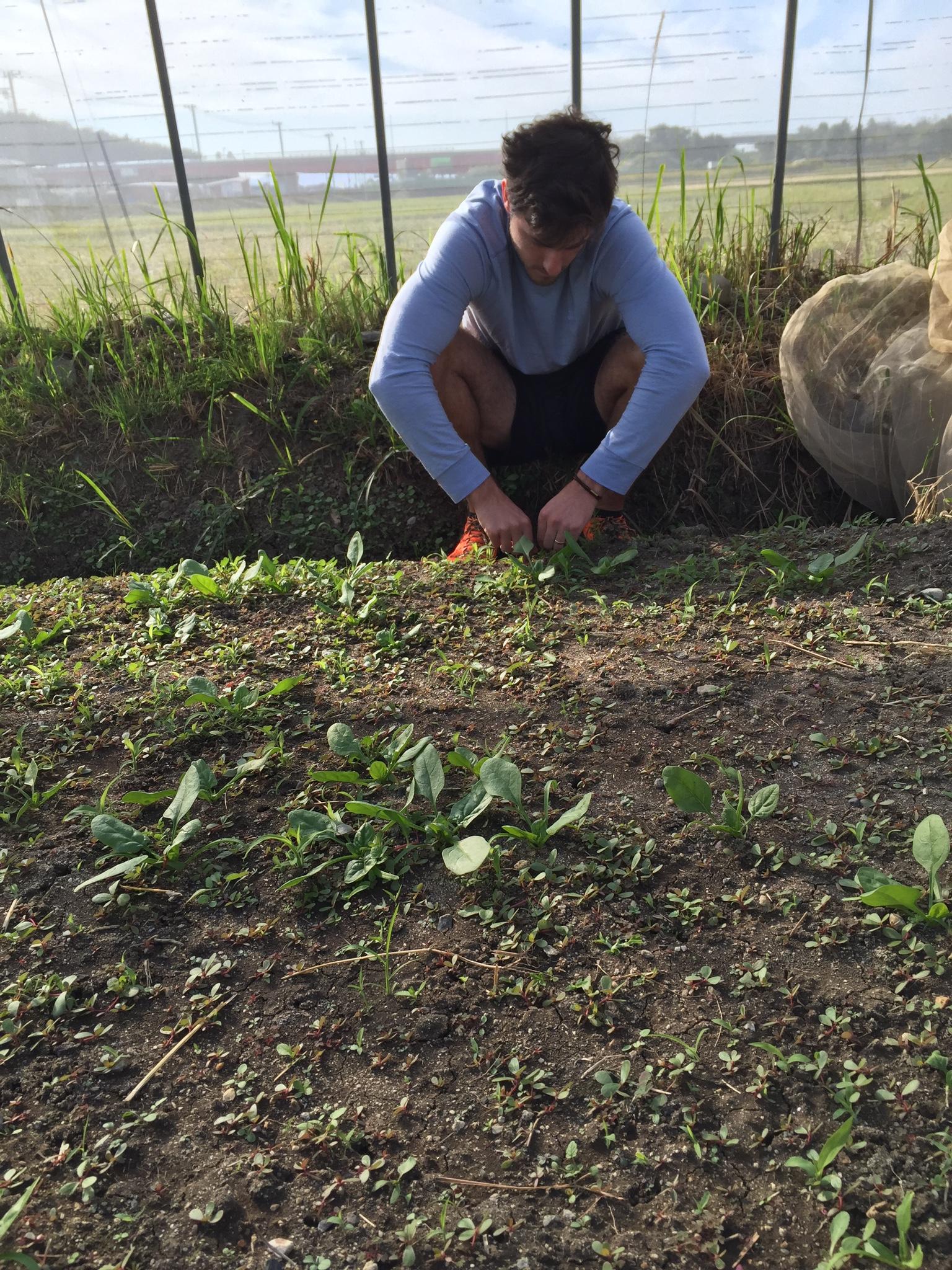 Cole weeds