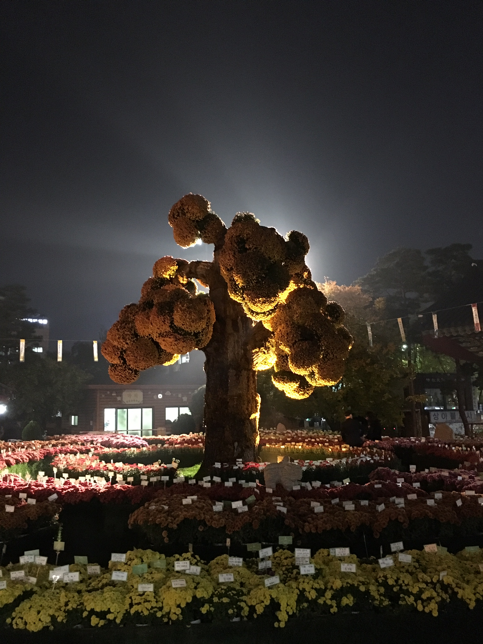 Buddhist flower tree