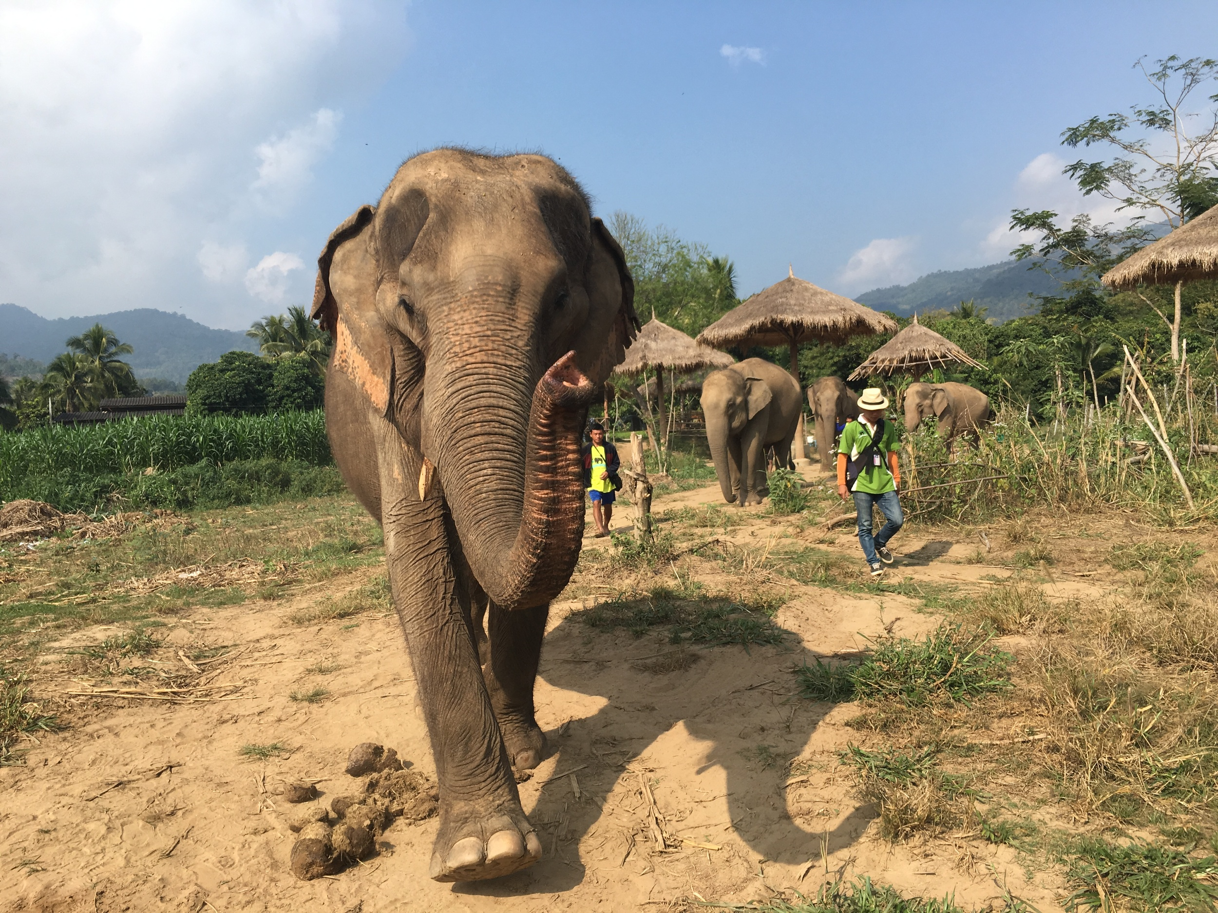 Elephant looking to be fed