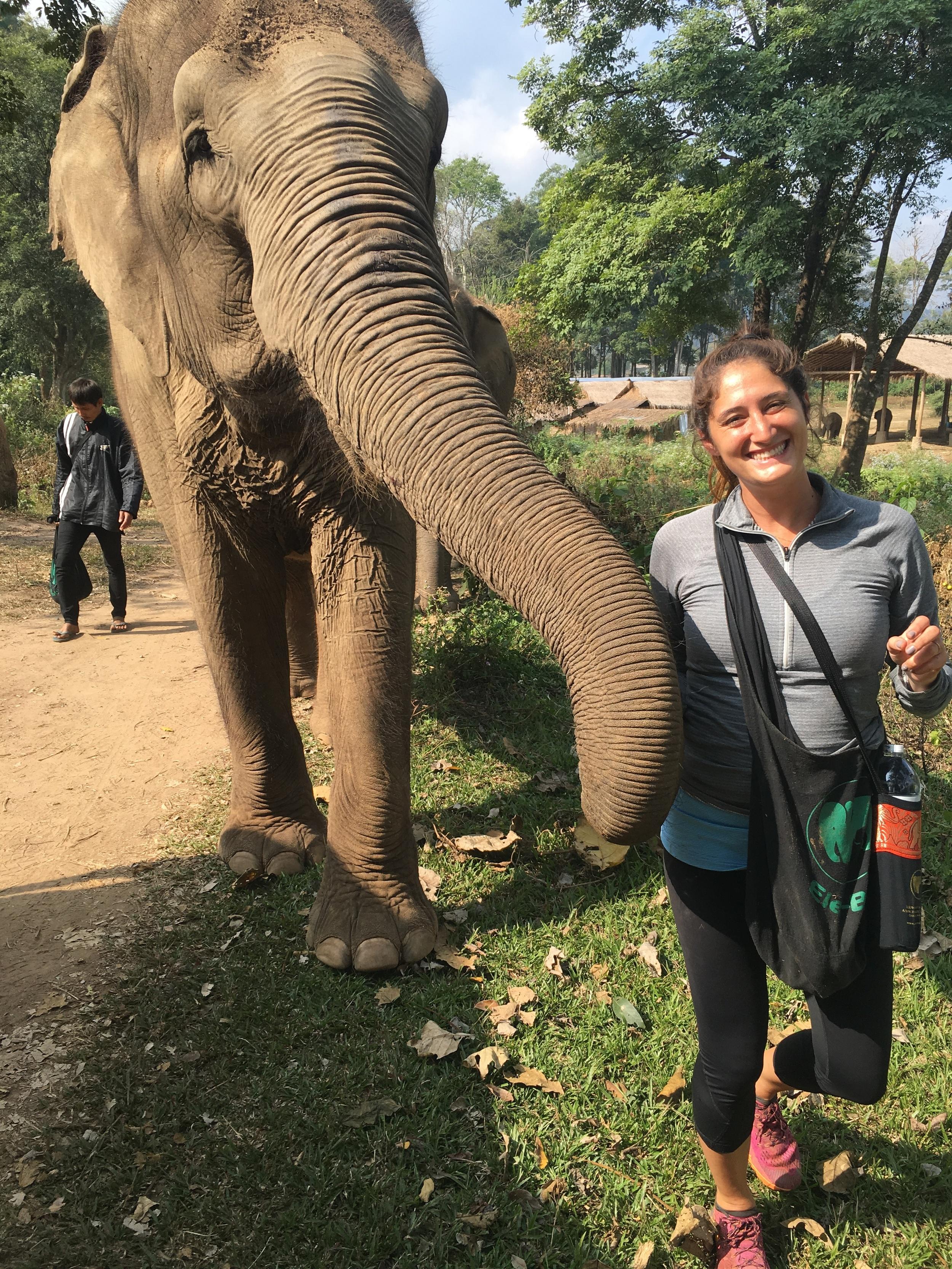 More Elephant Nature Park