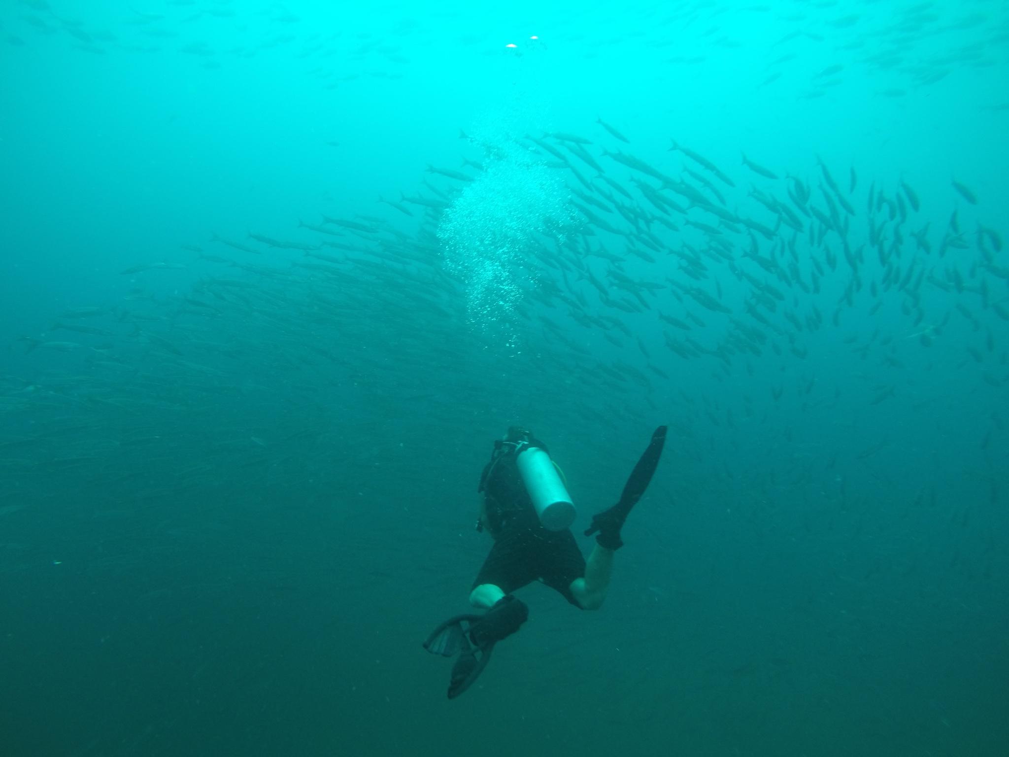 Fish chasing