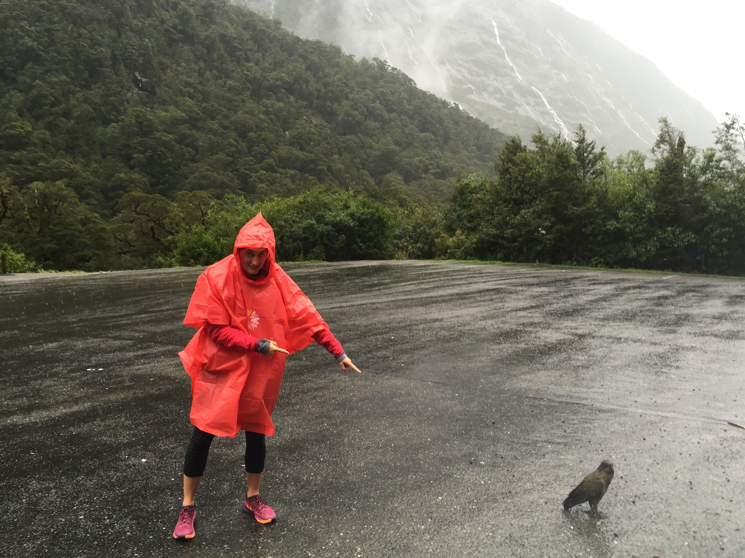 Native New Zealand Kaka bird in the parking lot... oh, and #poncho