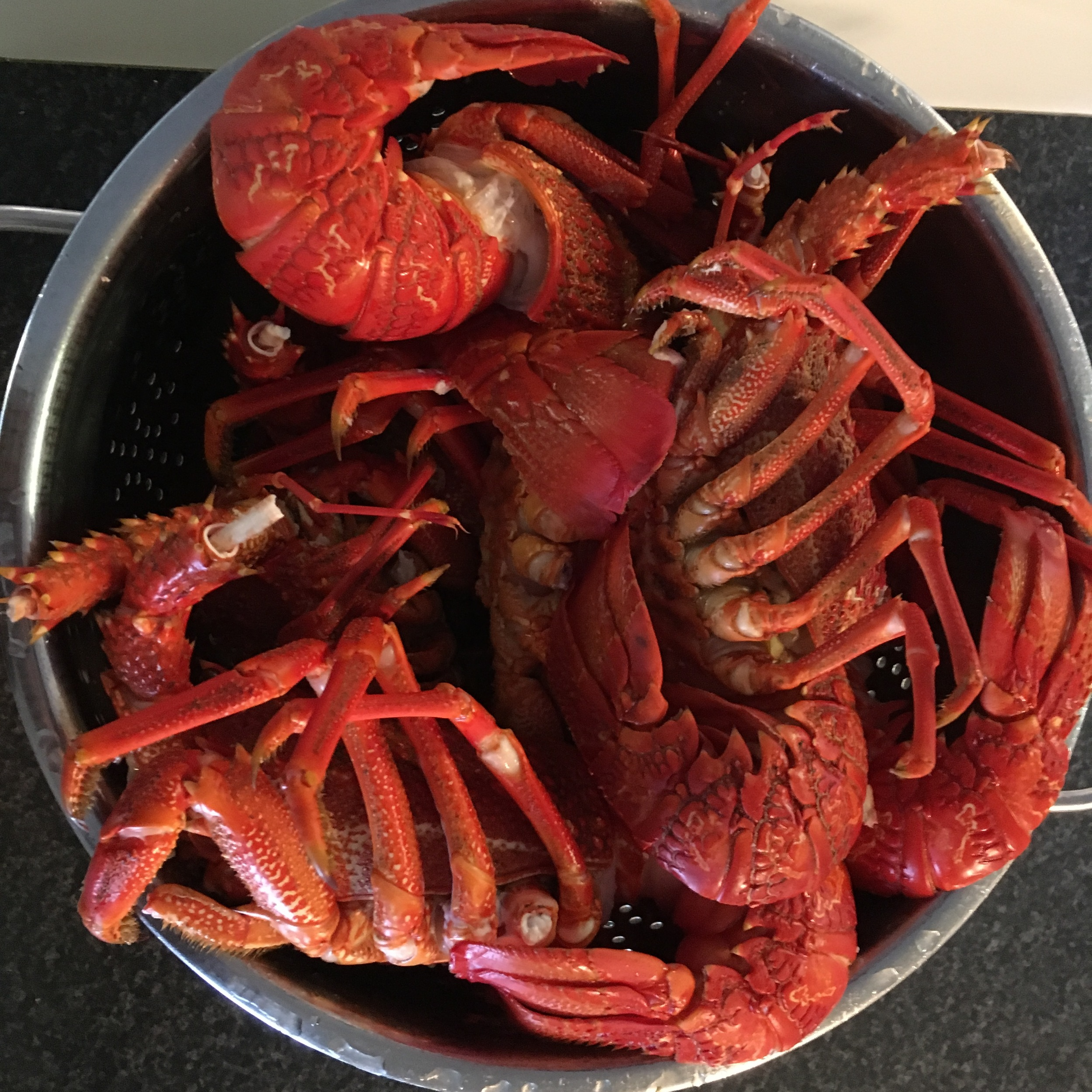 Crayfish for dinner on our boat