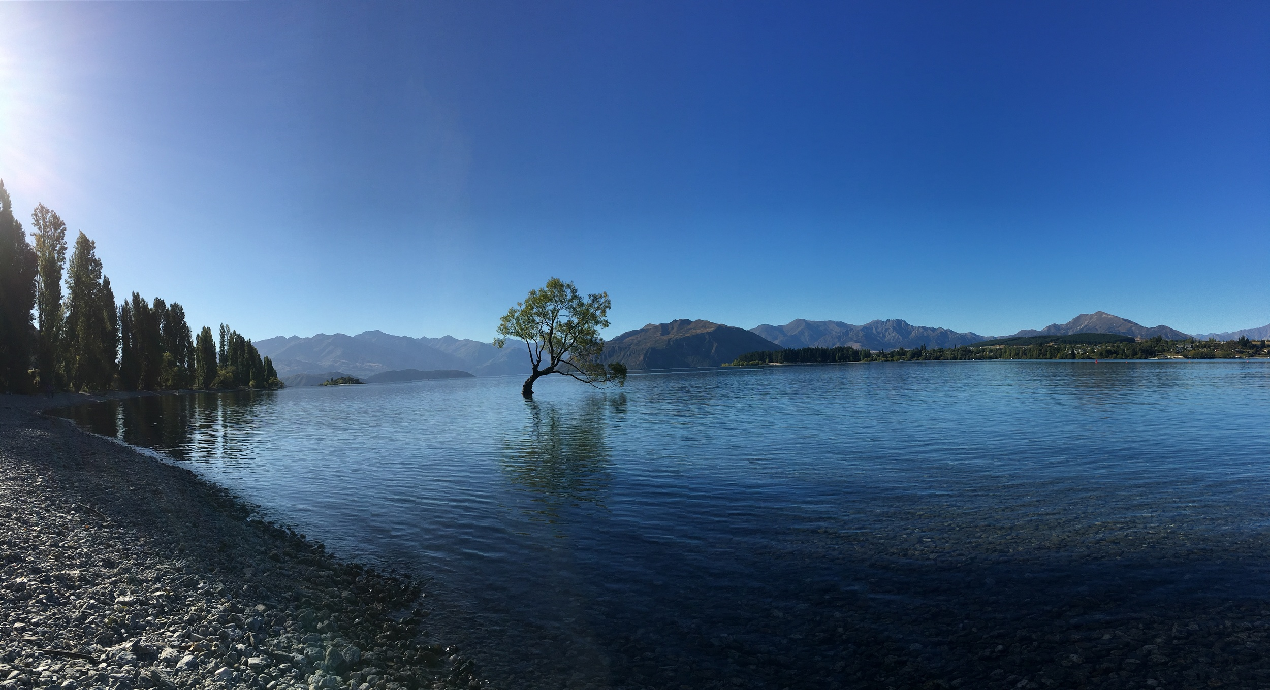 Wanaka's Lone Tree