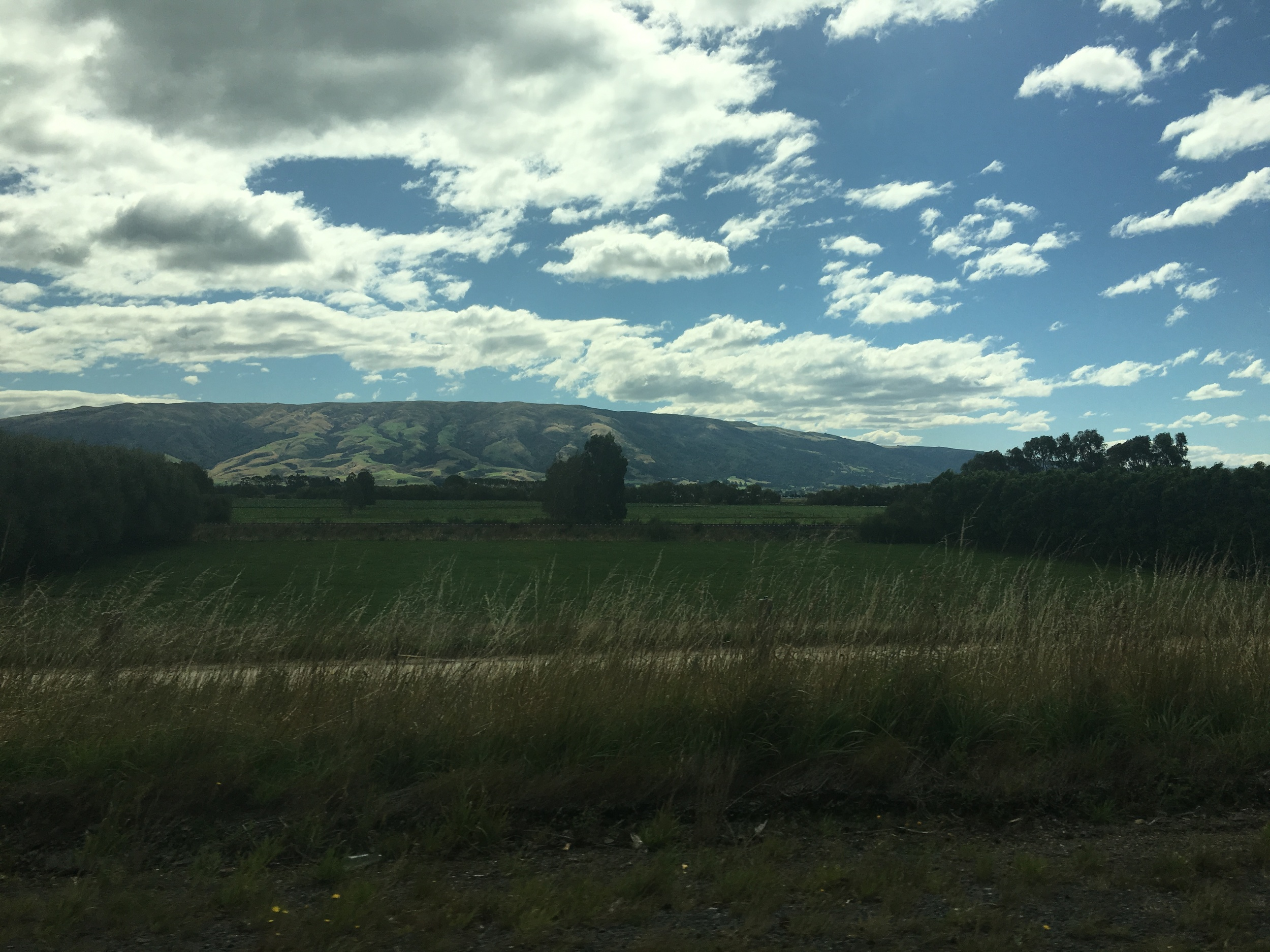 Rolling hills outside of Dunedin