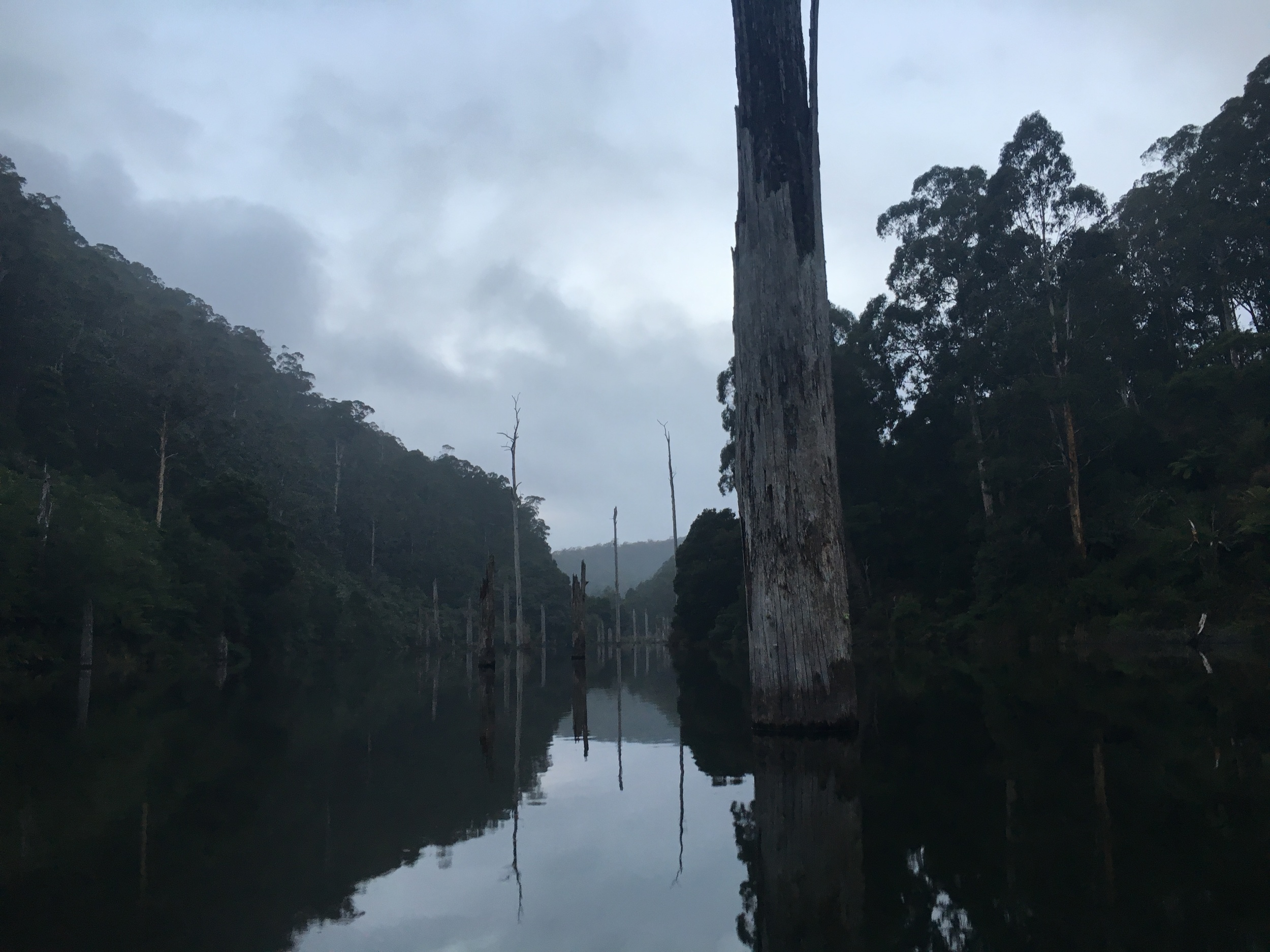 Platypus tour on the water