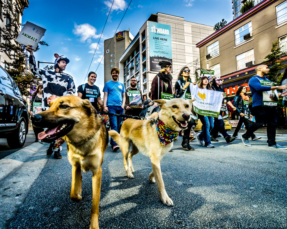 Dogs taking part in a march