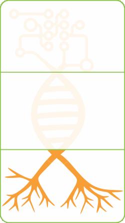 Logo_Roots_Web_RGB.png