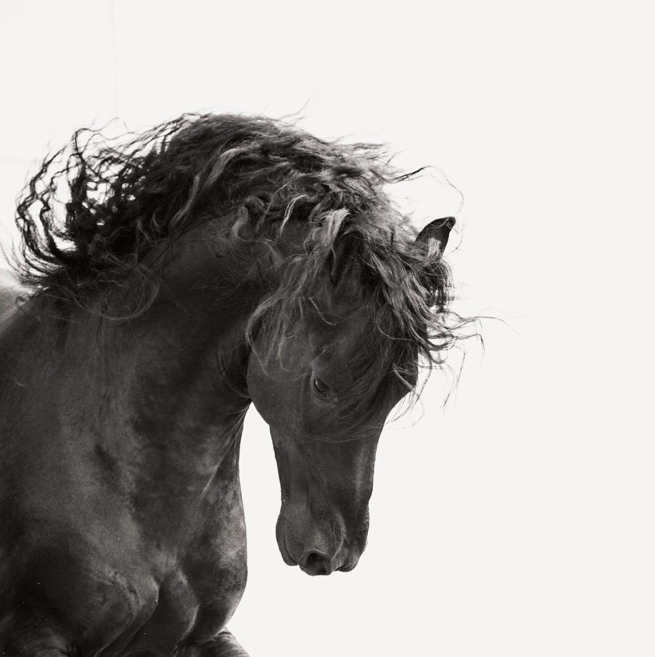 Dark Horse V 105cm x 105cm Ltd Edition of 12 - 6 remaining