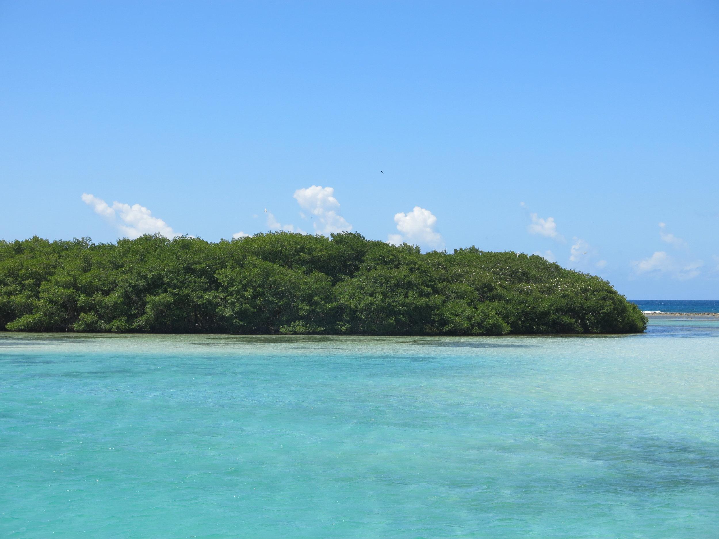 Mangroves in Boca Chica, Dominican Republic